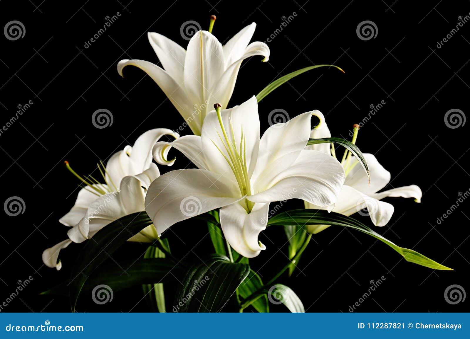 Mooie witte lelies