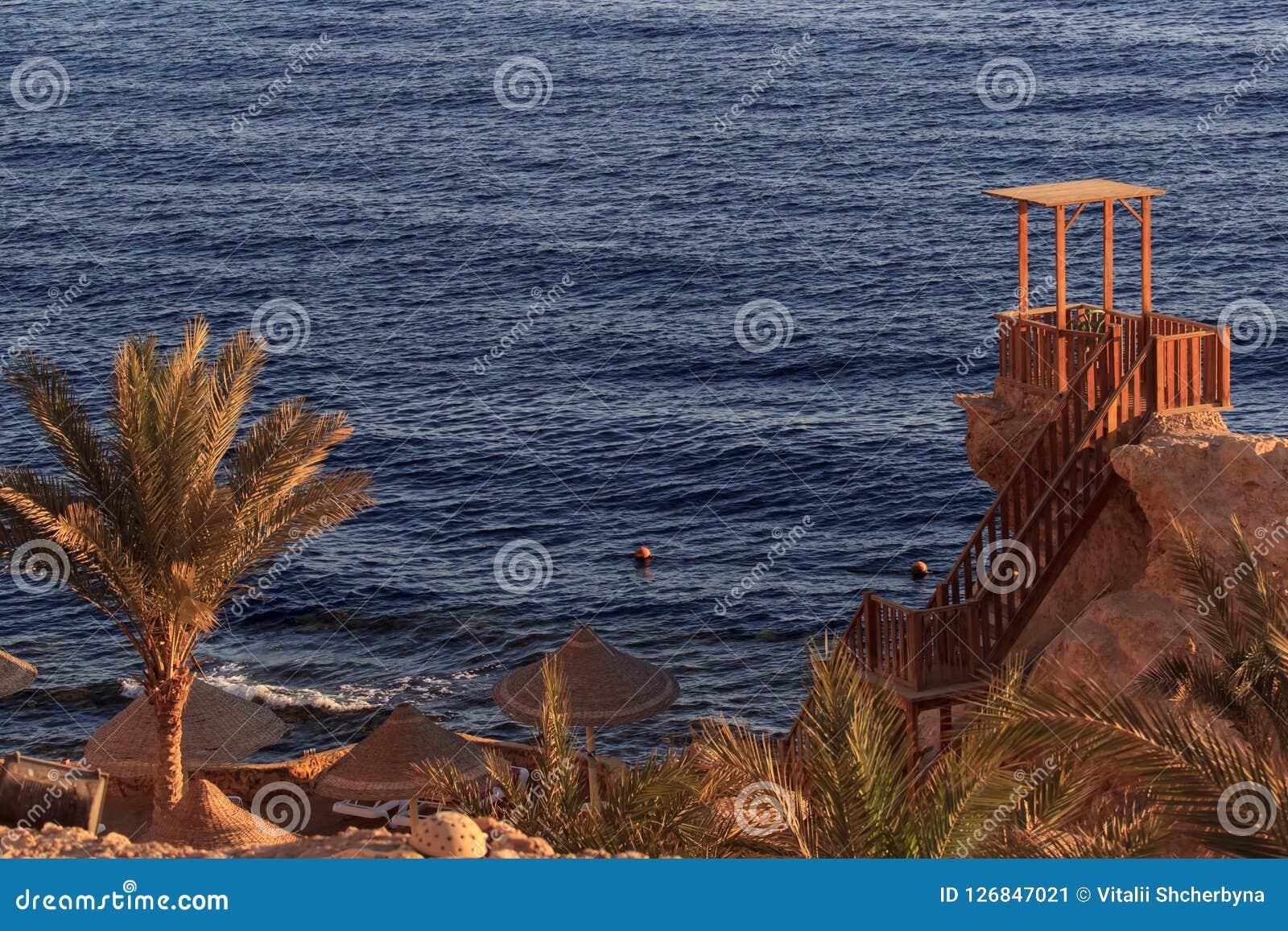 Mooie witte reigertribunes op gouden strand met palmen, selectieve nadruk Fantastisch verschrikkelijk dreamlike romantisch landsc