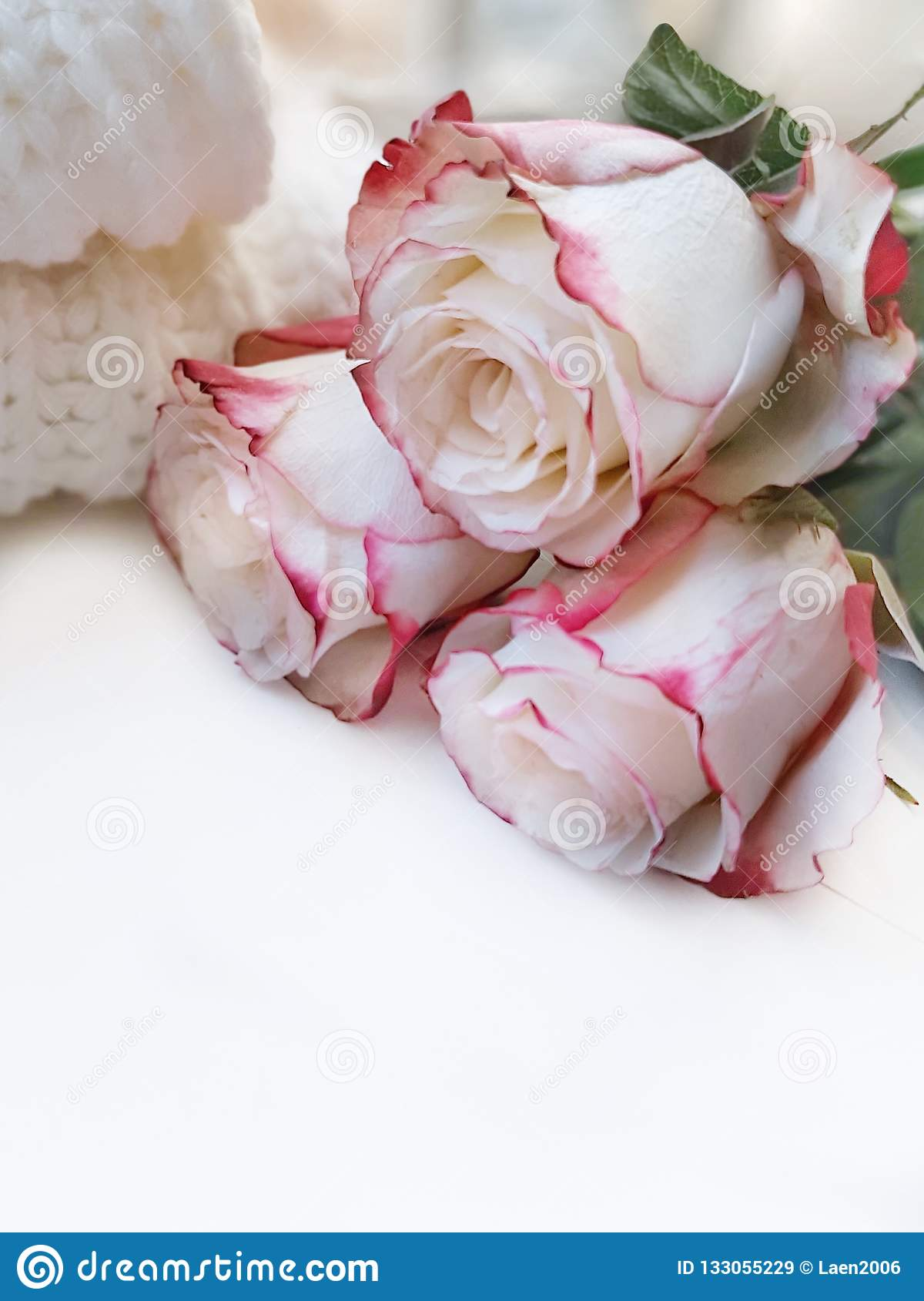 Mooie witte rozen met roze schaduw op witte achtergrond
