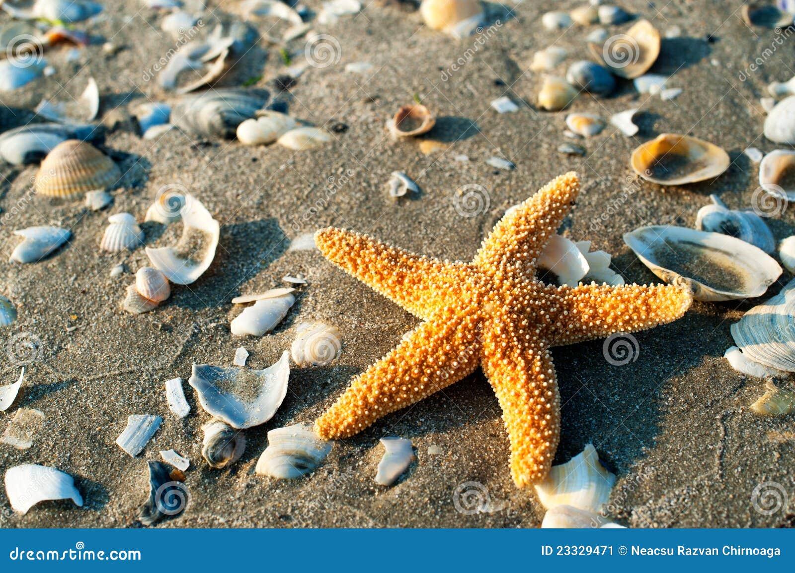 Mooie zeester stock afbeelding afbeelding bestaande uit ontspanning 23329471 - Een mooie kamer van een mooie meid ...