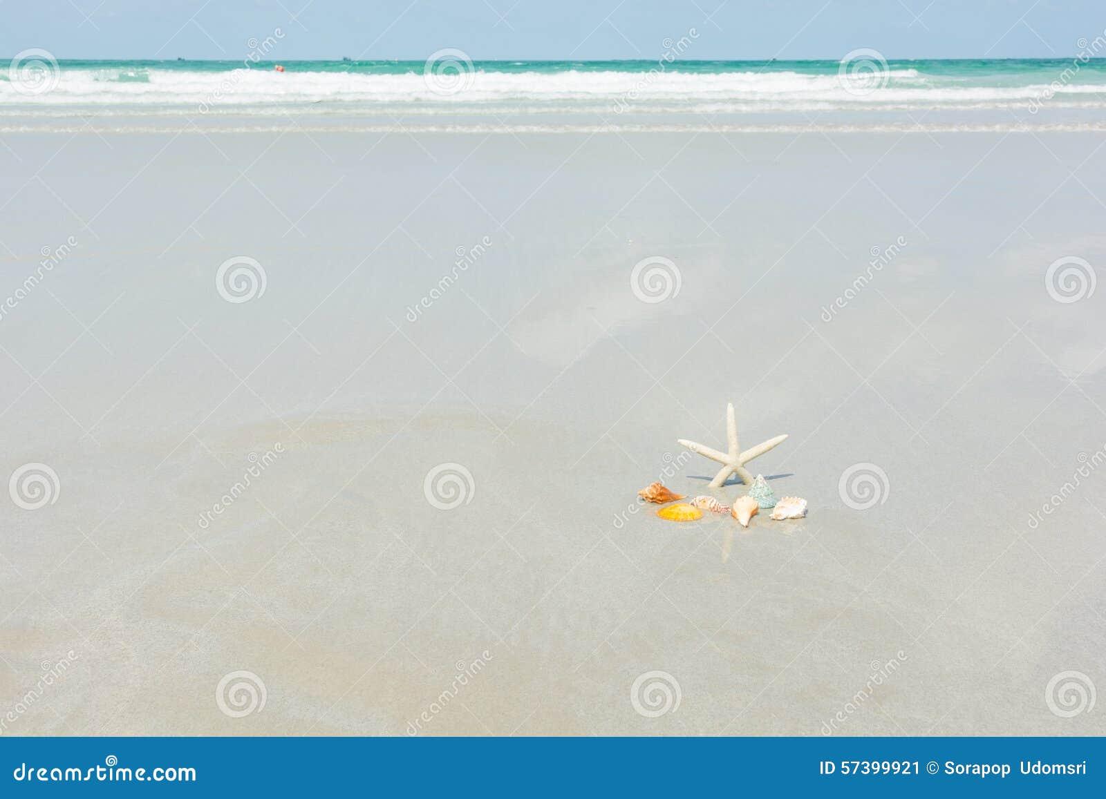 Mooie zeester met overzees