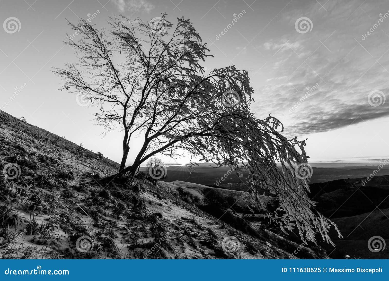 Mooie zonsondergang op een berg, met sneeuw die de grond en de vorst op de takken van bomen behandelen