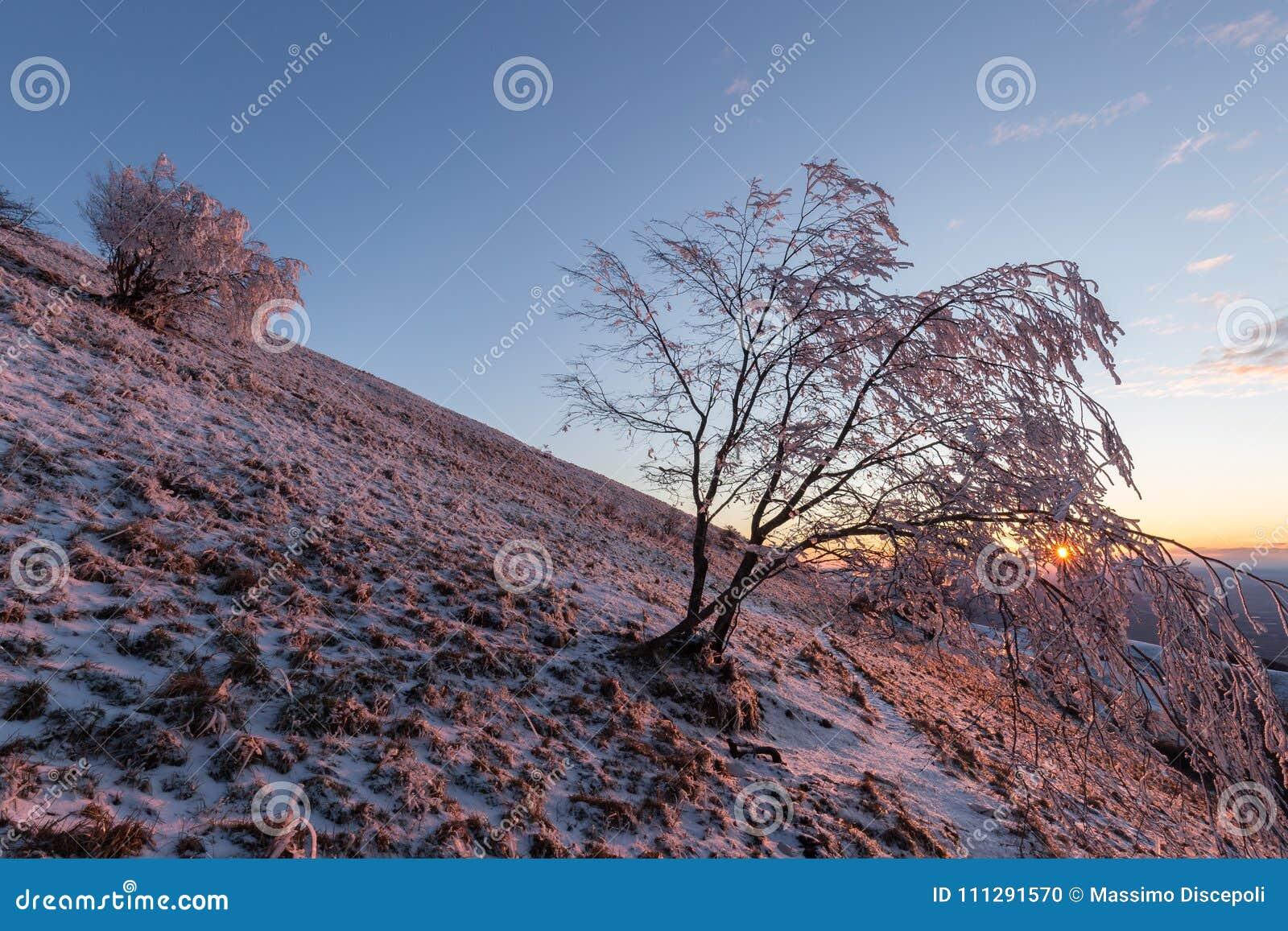 Mooie zonsondergang op een berg, met sneeuw die de grond, vorst op de takken van bomen en warme lichte bezinningen behandelen