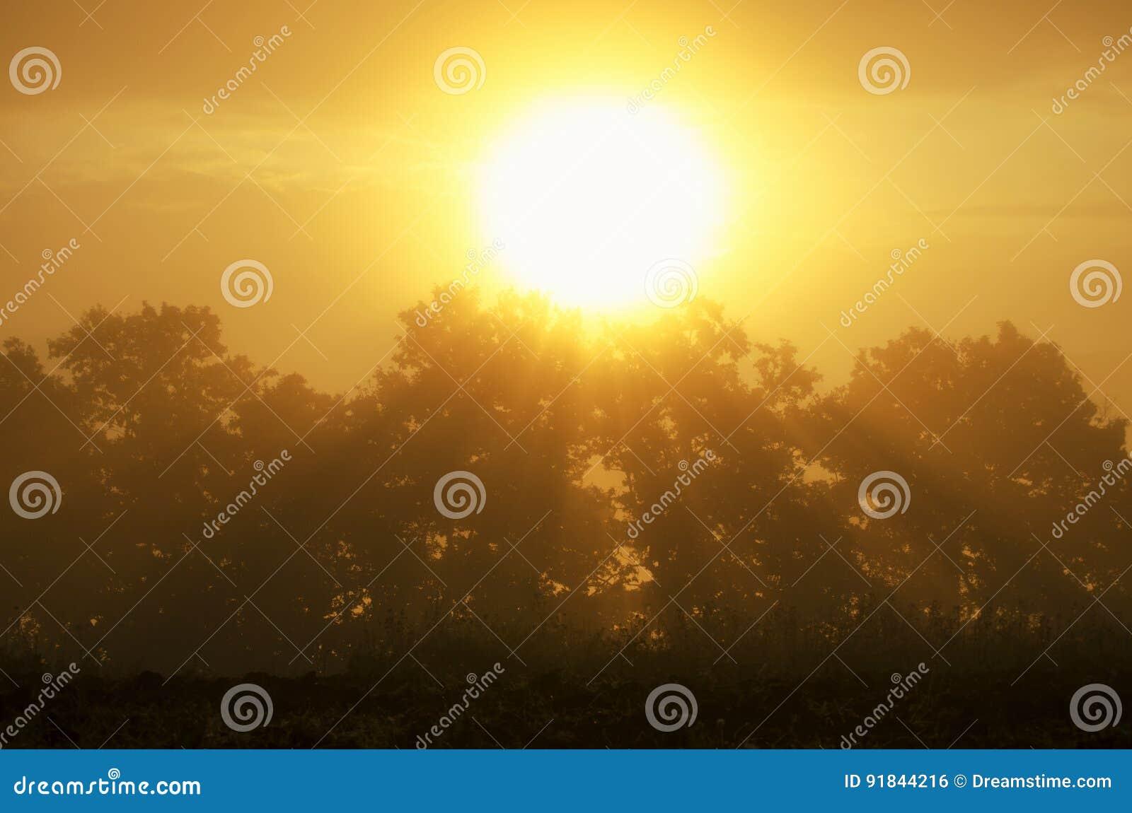 Mooie zonsopgang in de zomer
