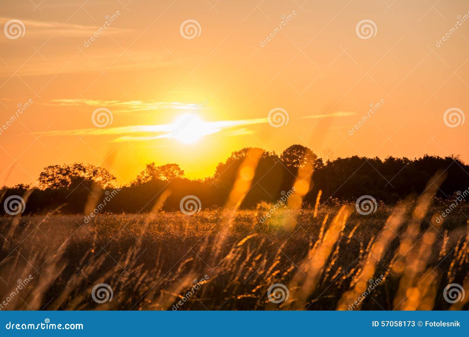 Mooie zonsopgang over het bos