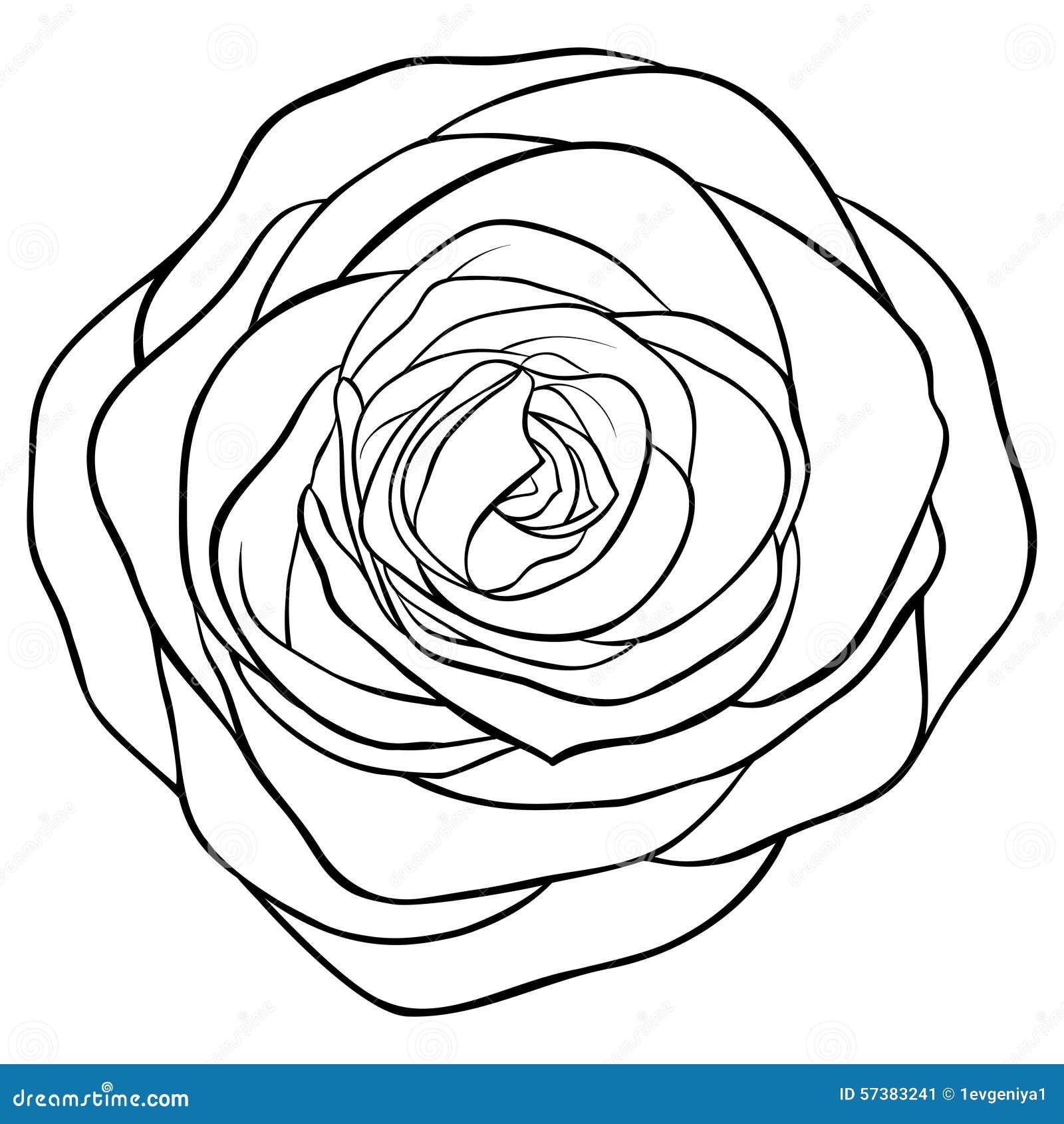 Mooie zwart-wit zwart-wit nam geïsoleerd op witte achtergrond toe