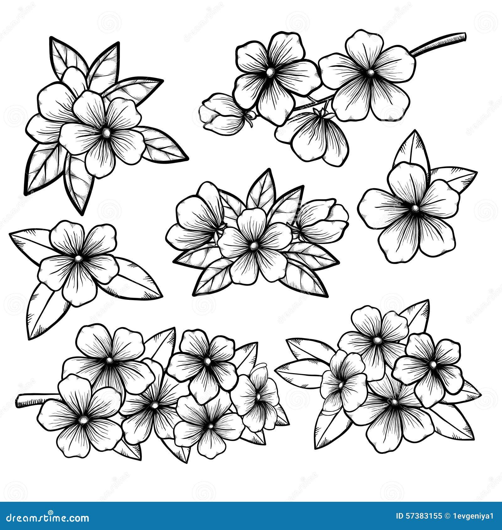 Mooie zwart-wit zwart-witte bloemeninzameling met bladeren en bloemen