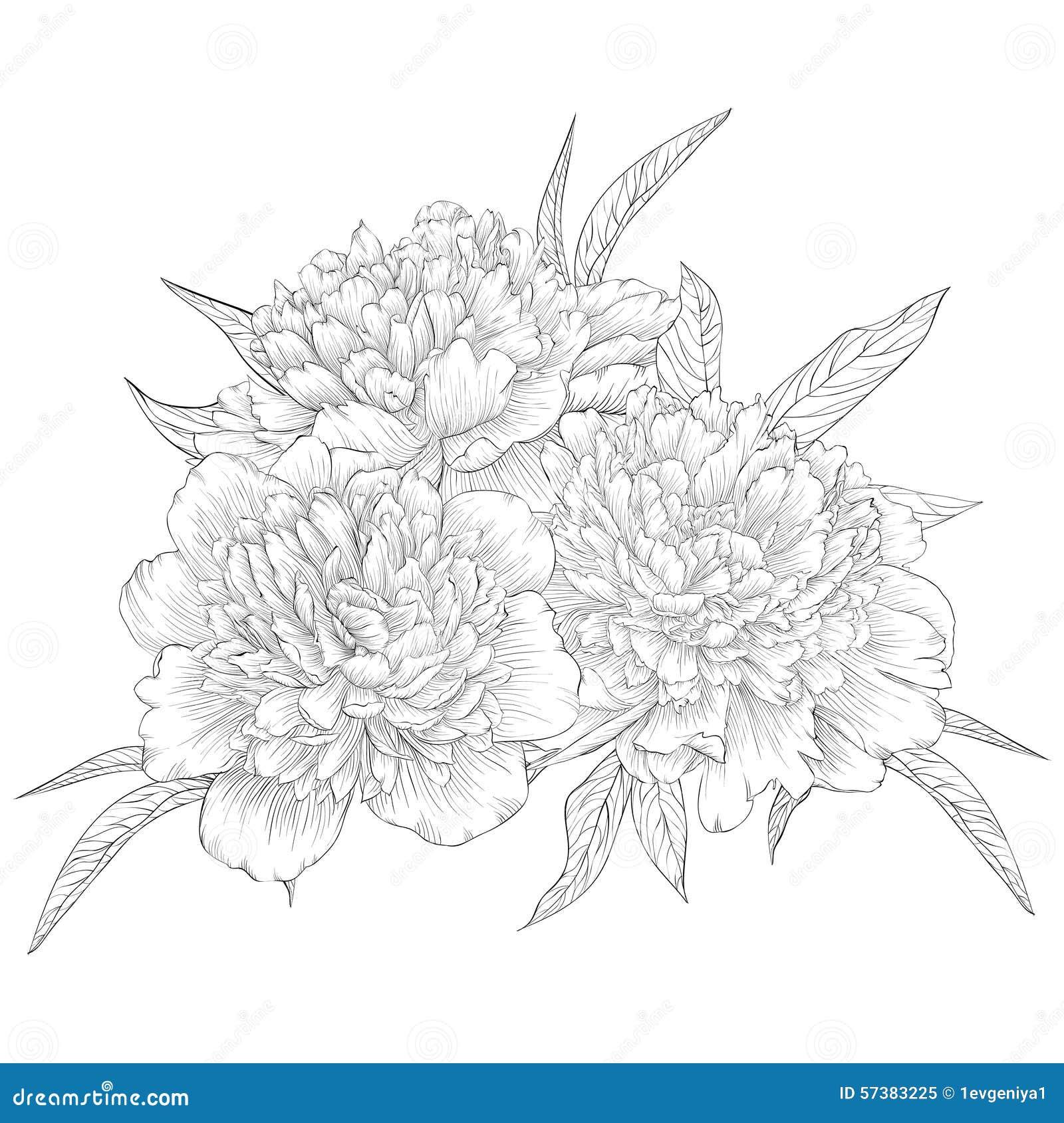 Mooie zwart-wit zwart-witte die boeketpioen op achtergrond wordt geïsoleerd Hand-drawn contourlijn