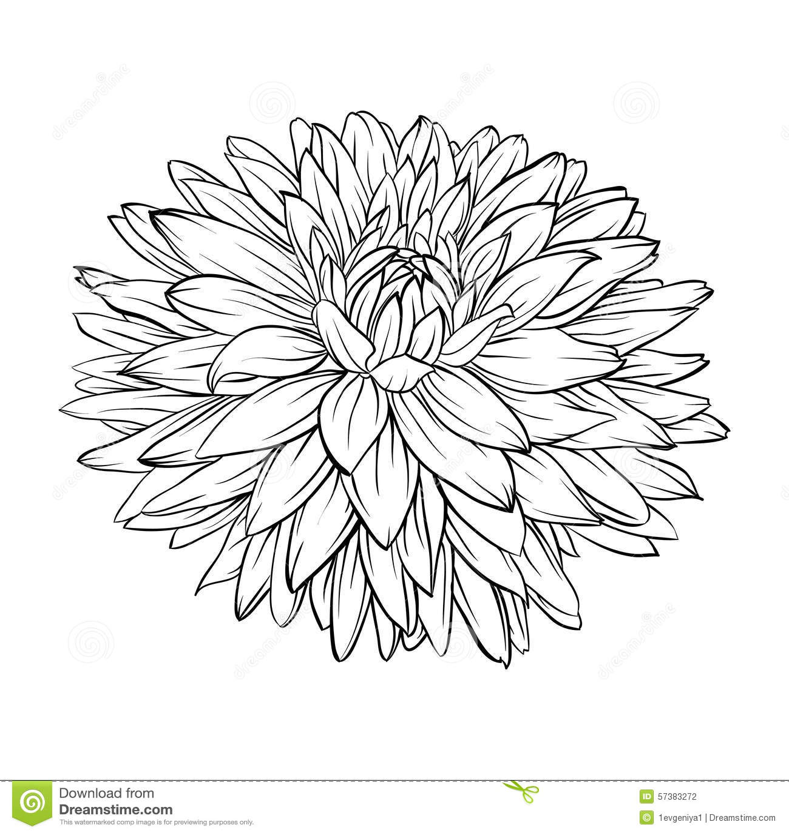 Mooie zwart-wit, zwart-witte geïsoleerde dahliabloem Hand-drawn contourlijnen en slagen
