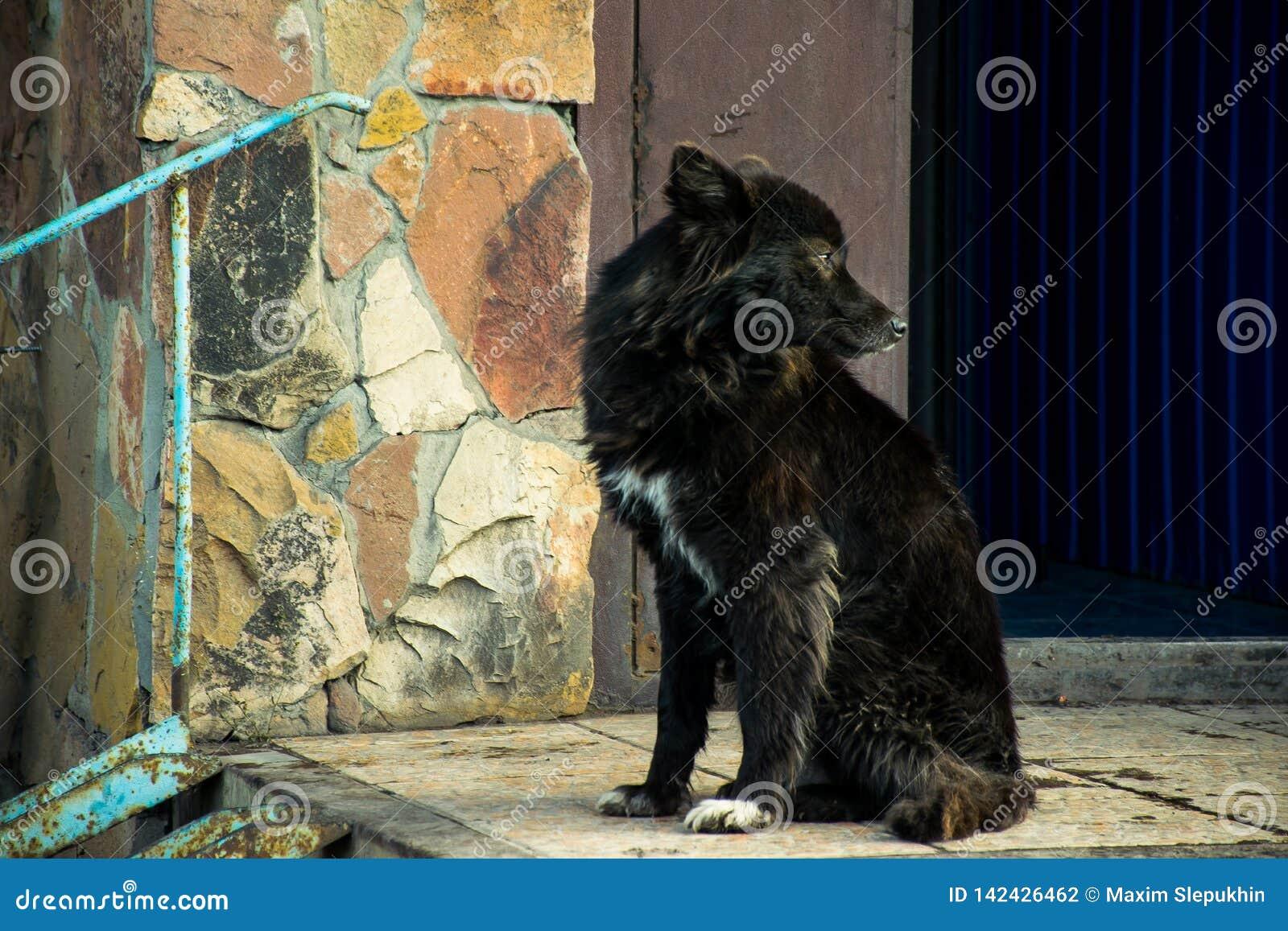 Mooie zwarte hond door de steenmuur