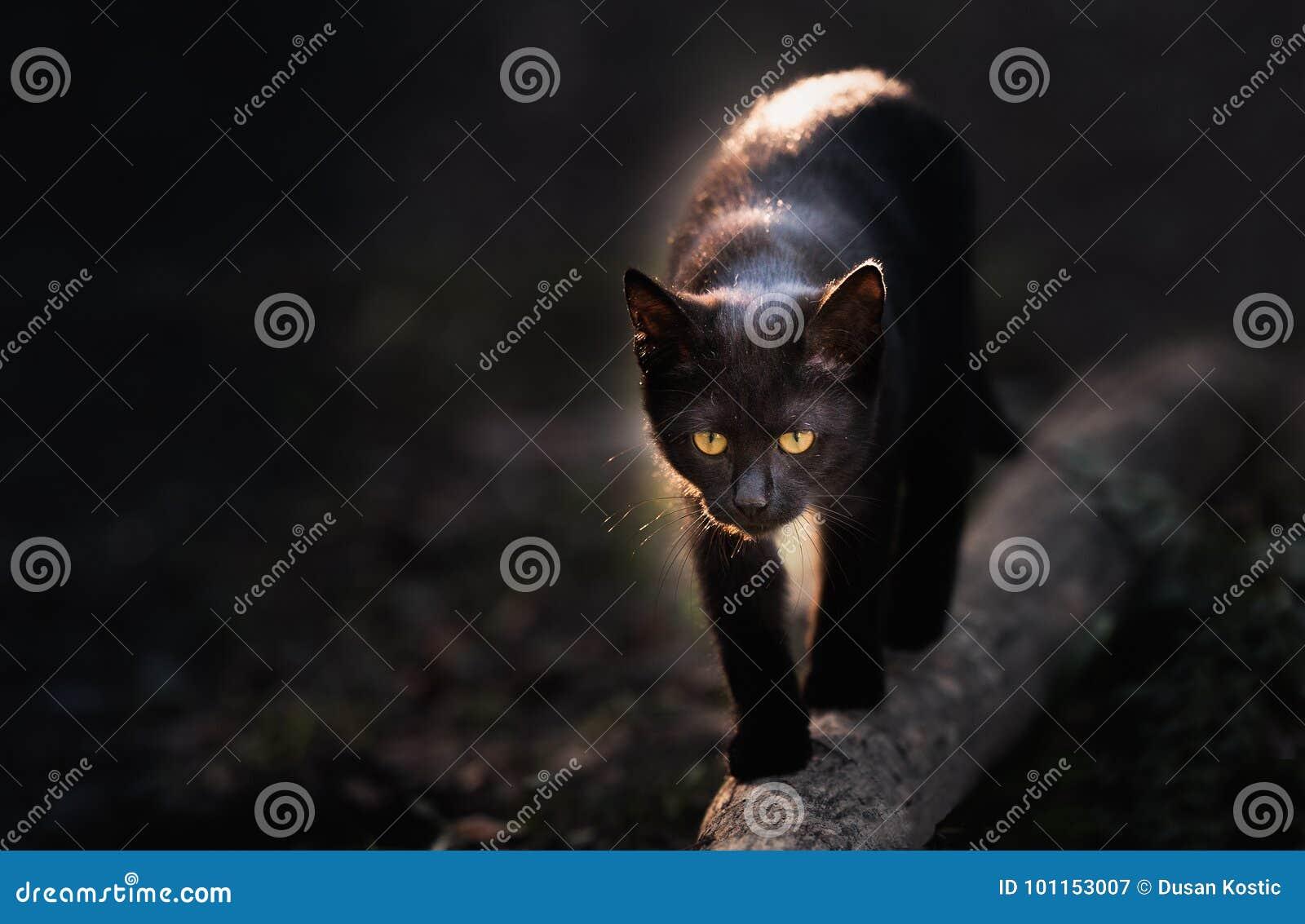 Mooie zwarte kat die onderaan de straat lopen