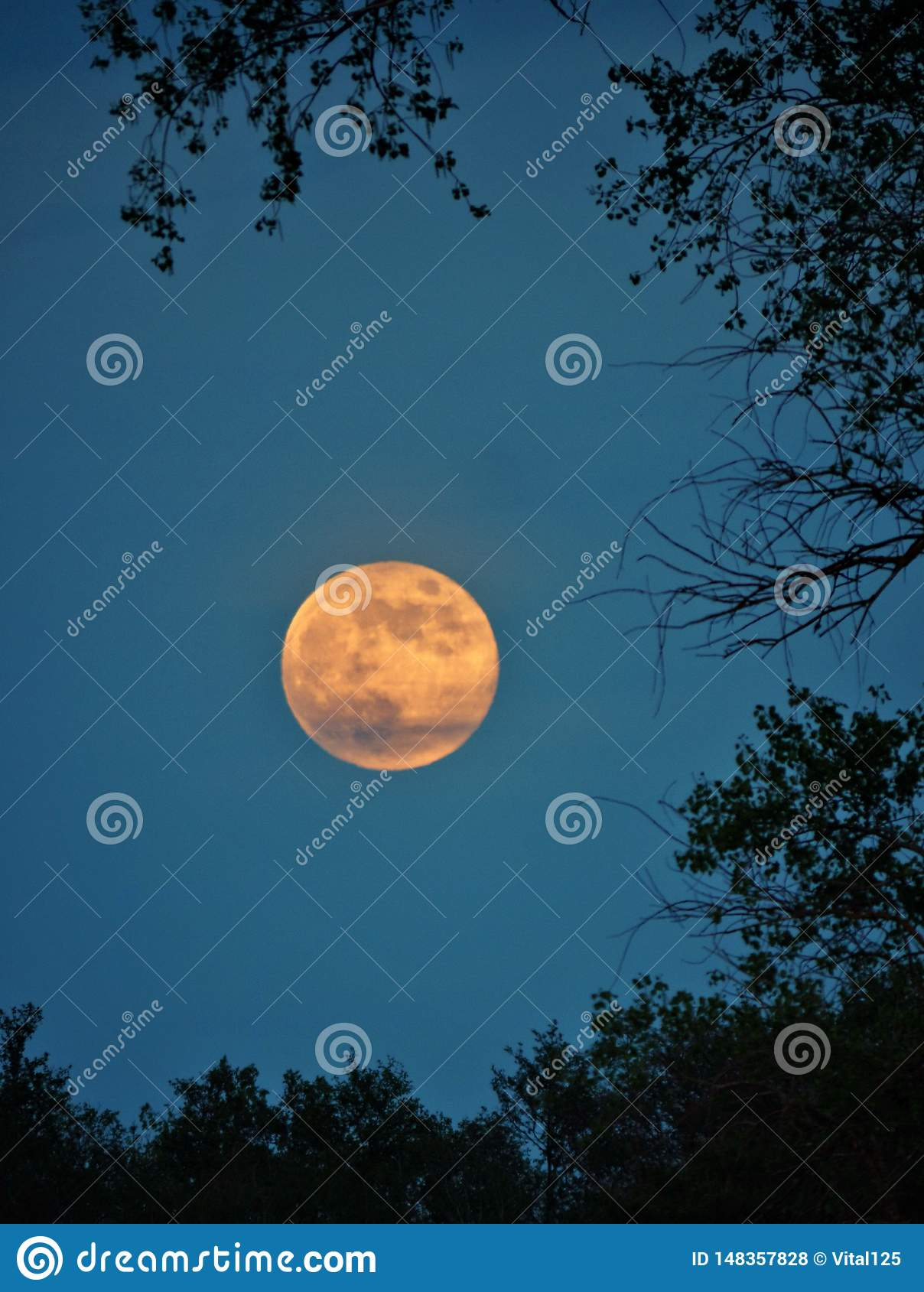 Moon rise and light over green forest
