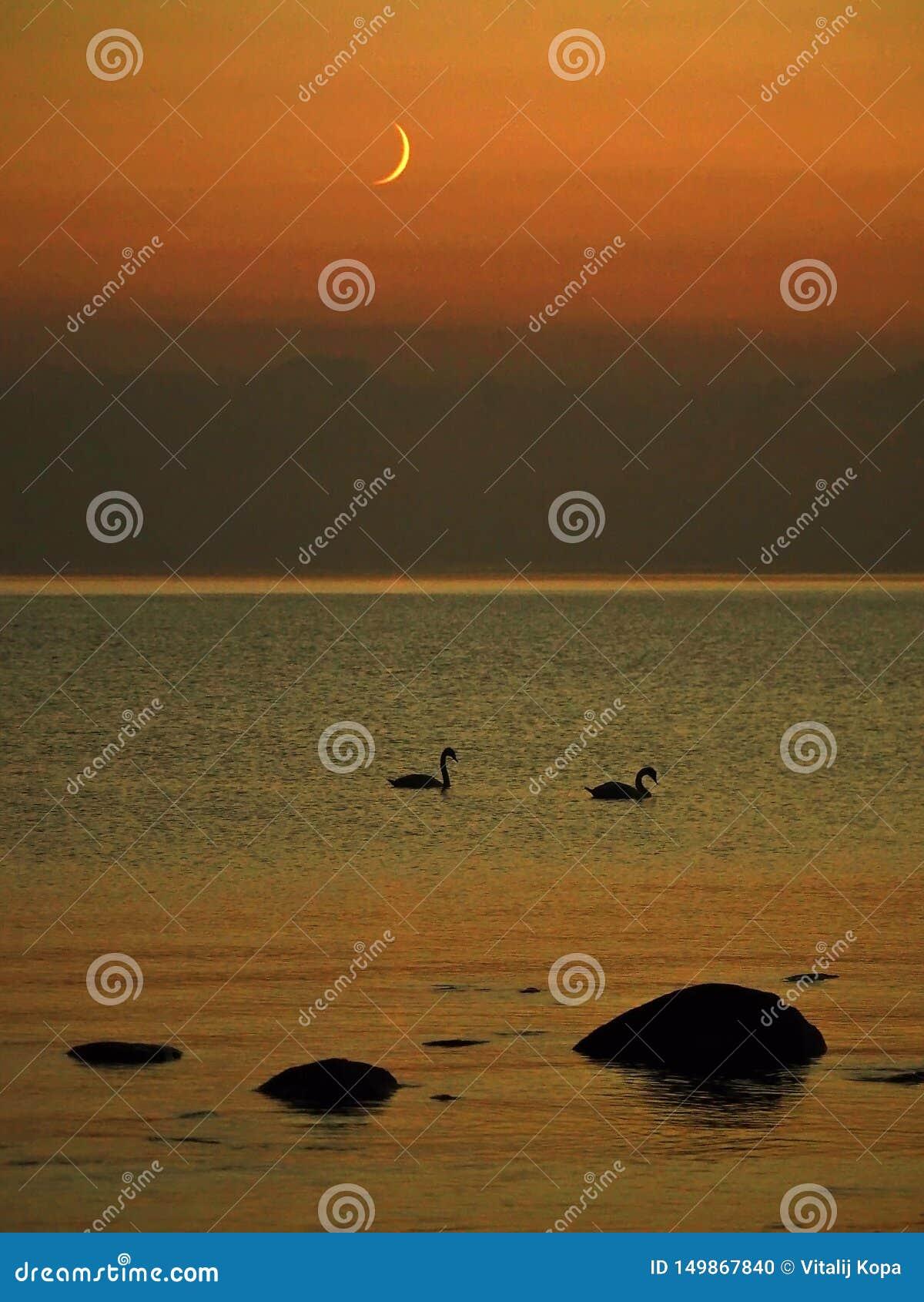 Moon set over sea stone coast and swans