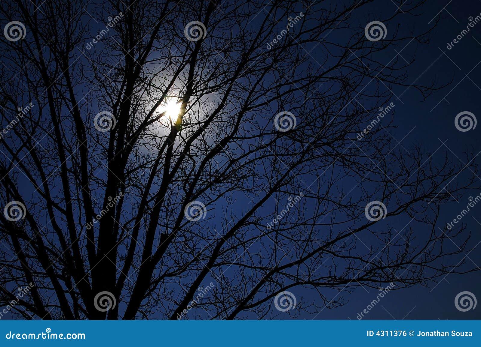 Moonlight in a tree