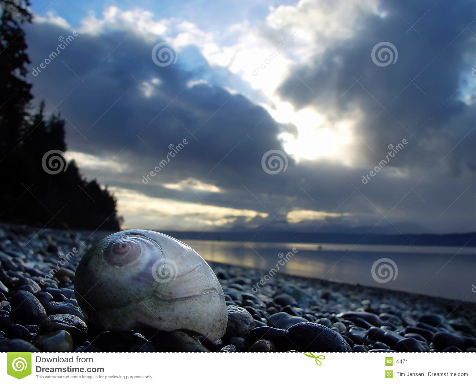 Moonshell on beach