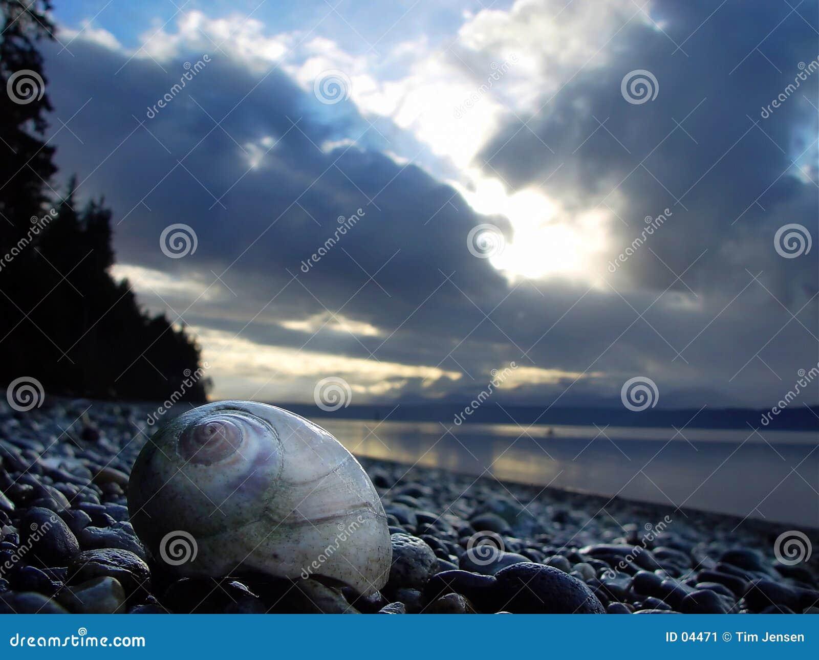 Moonshell na praia