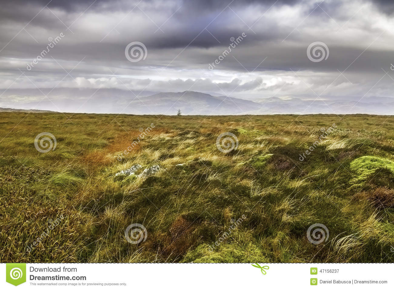 Moorland and bog in Snowdonia National Park in Wales