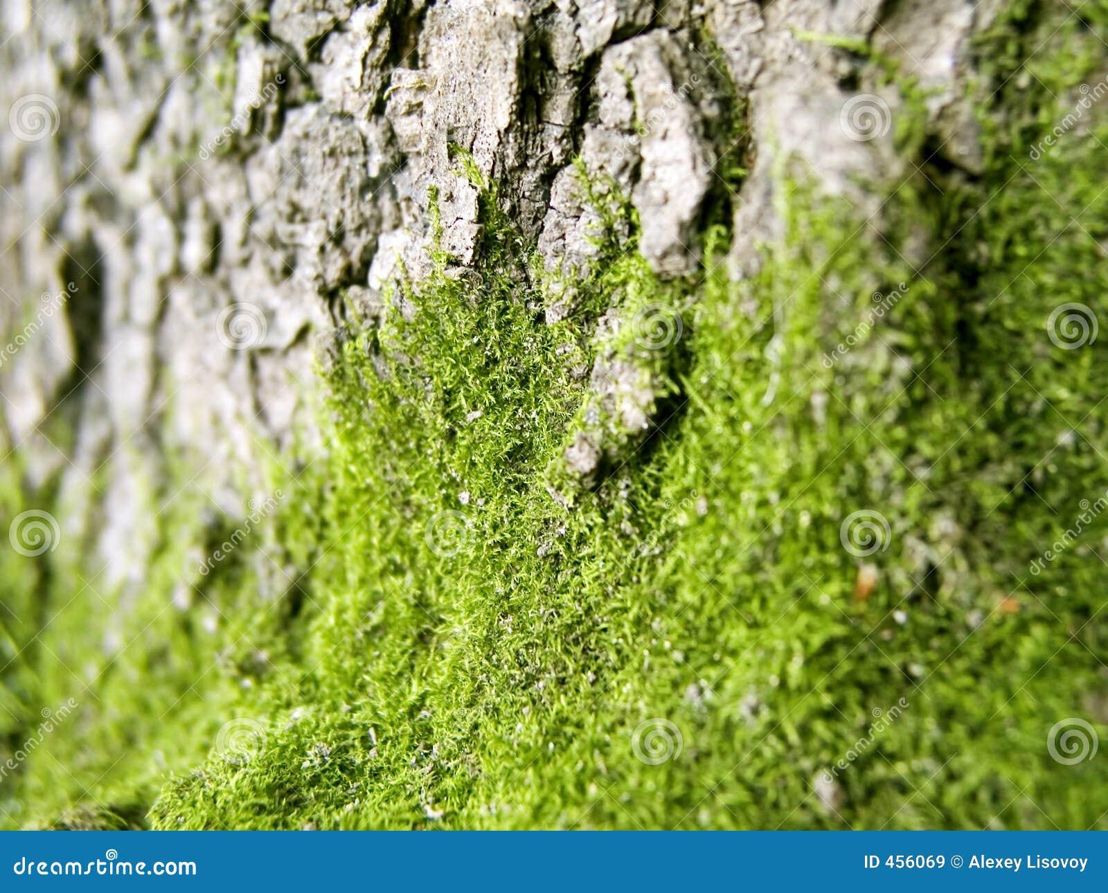 Moos 1 lizenzfreie stockbilder bild 456069 for Moos bilder pflanzen