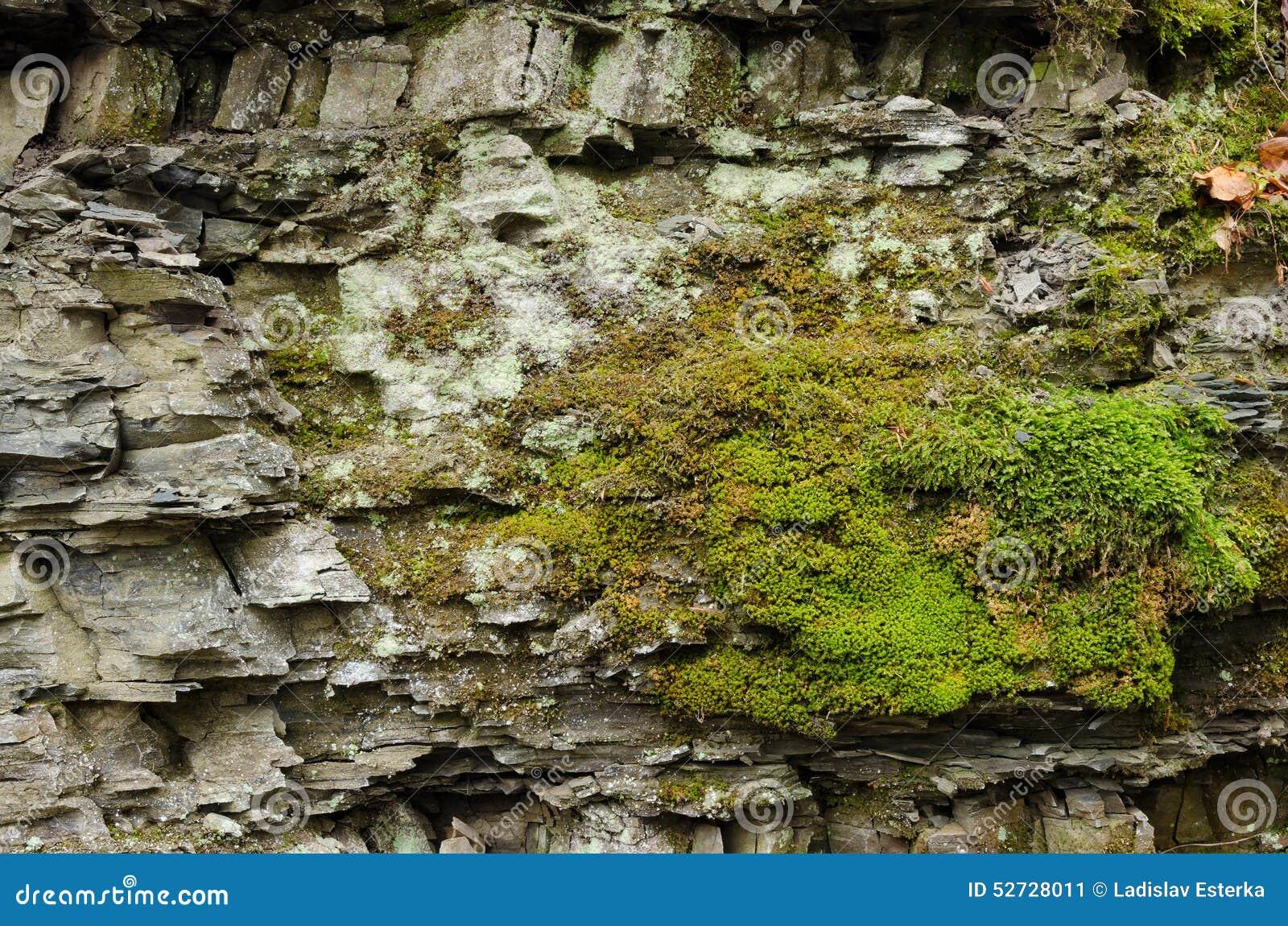 Moos auf den Felsen