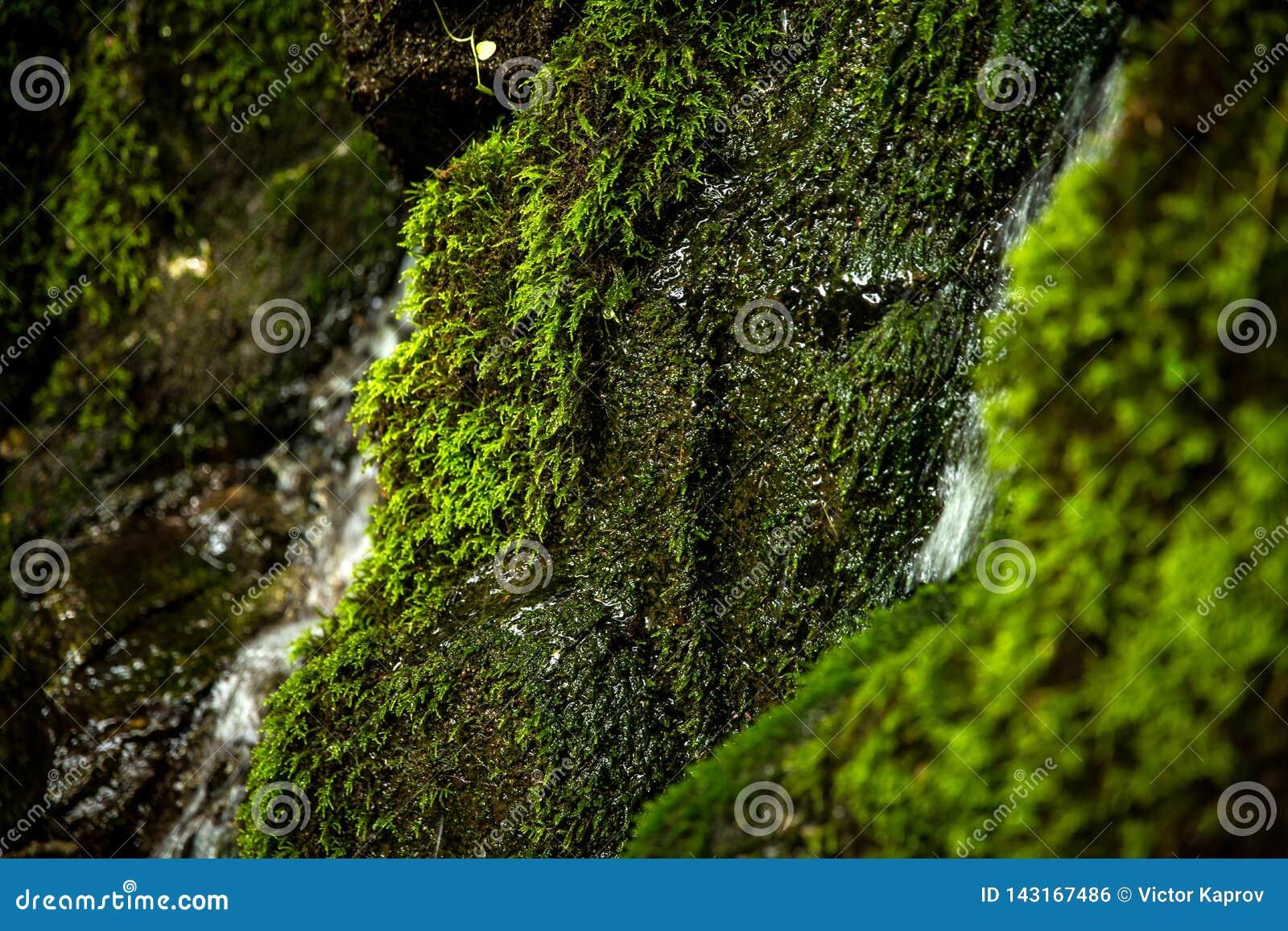 Moos auf den Steinen eines Wasserfalls im Wald