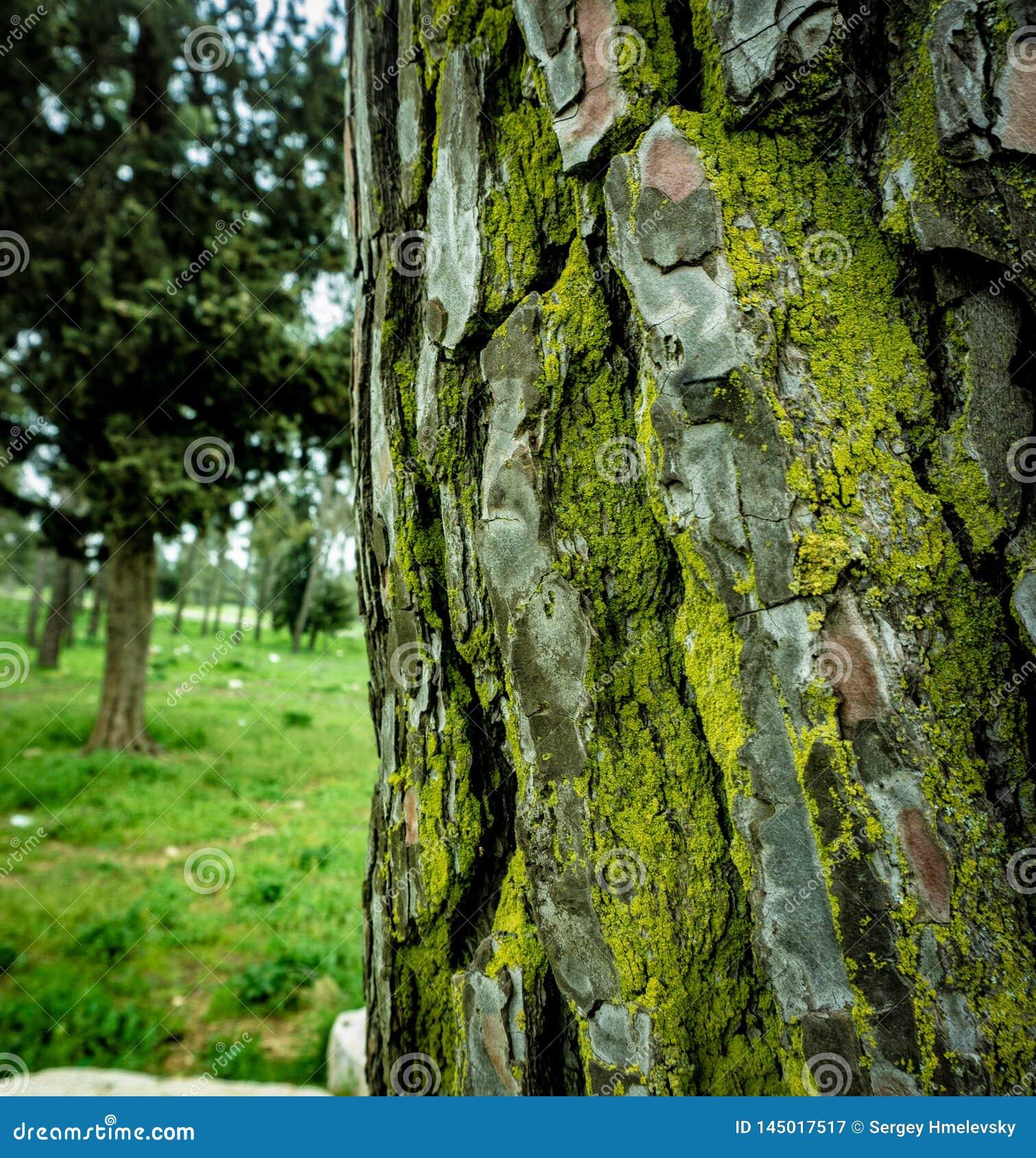 Moos auf einem Baumstamm