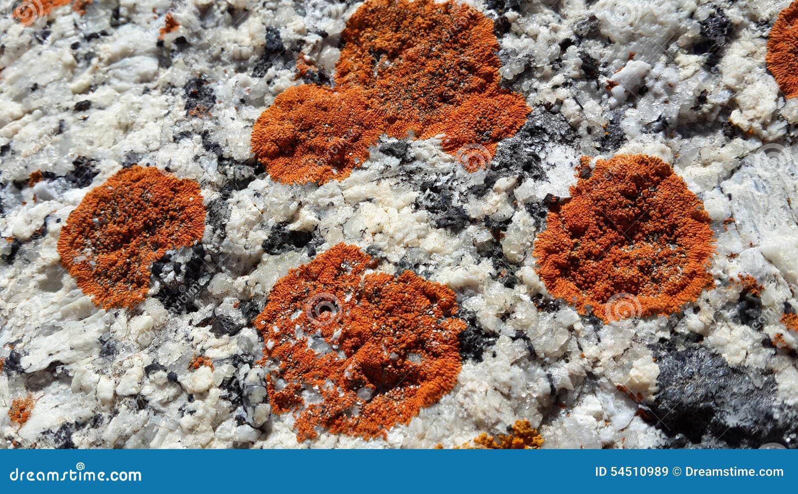 Moos auf Felsen