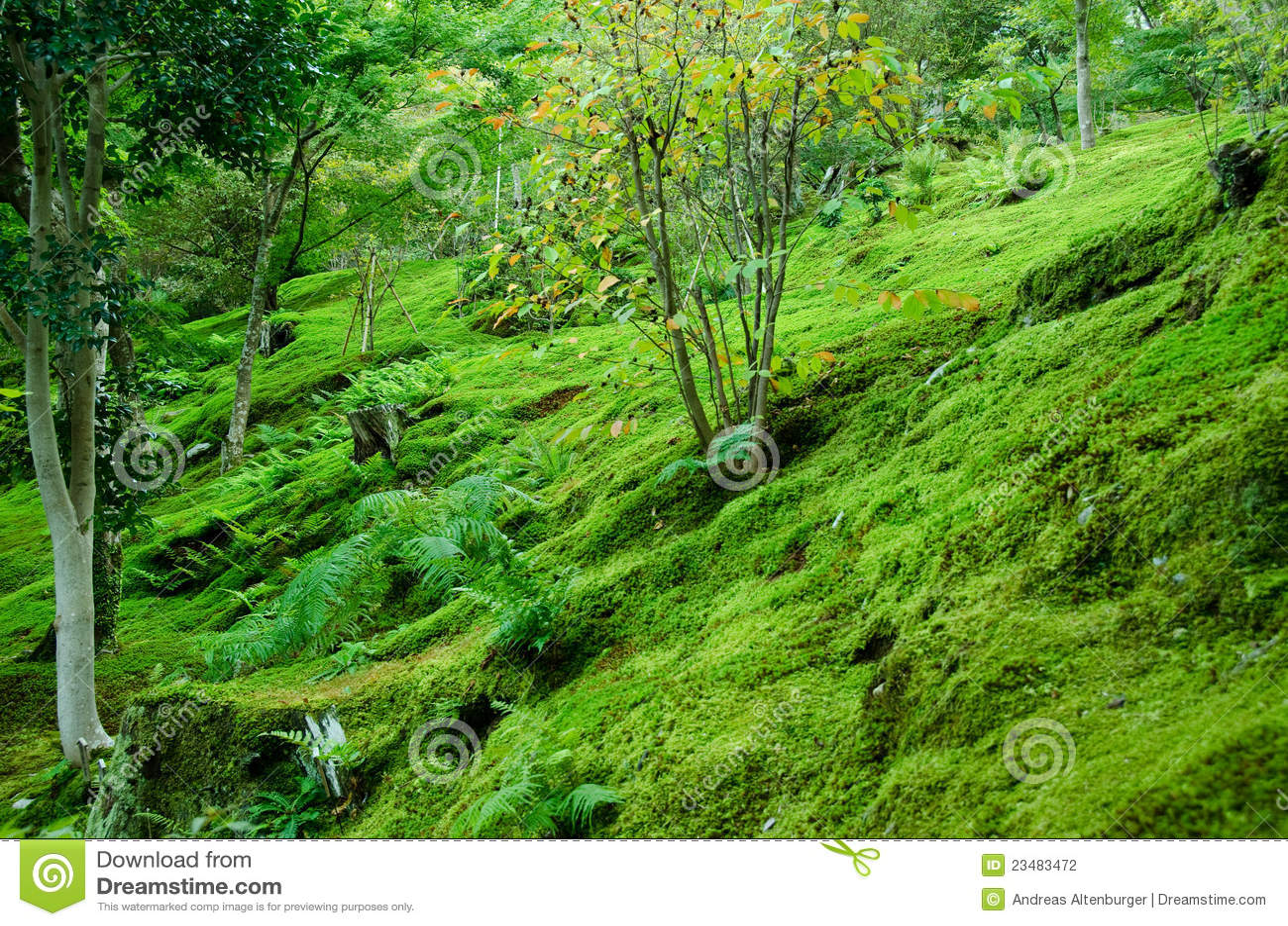 Moos auf Waldfußboden
