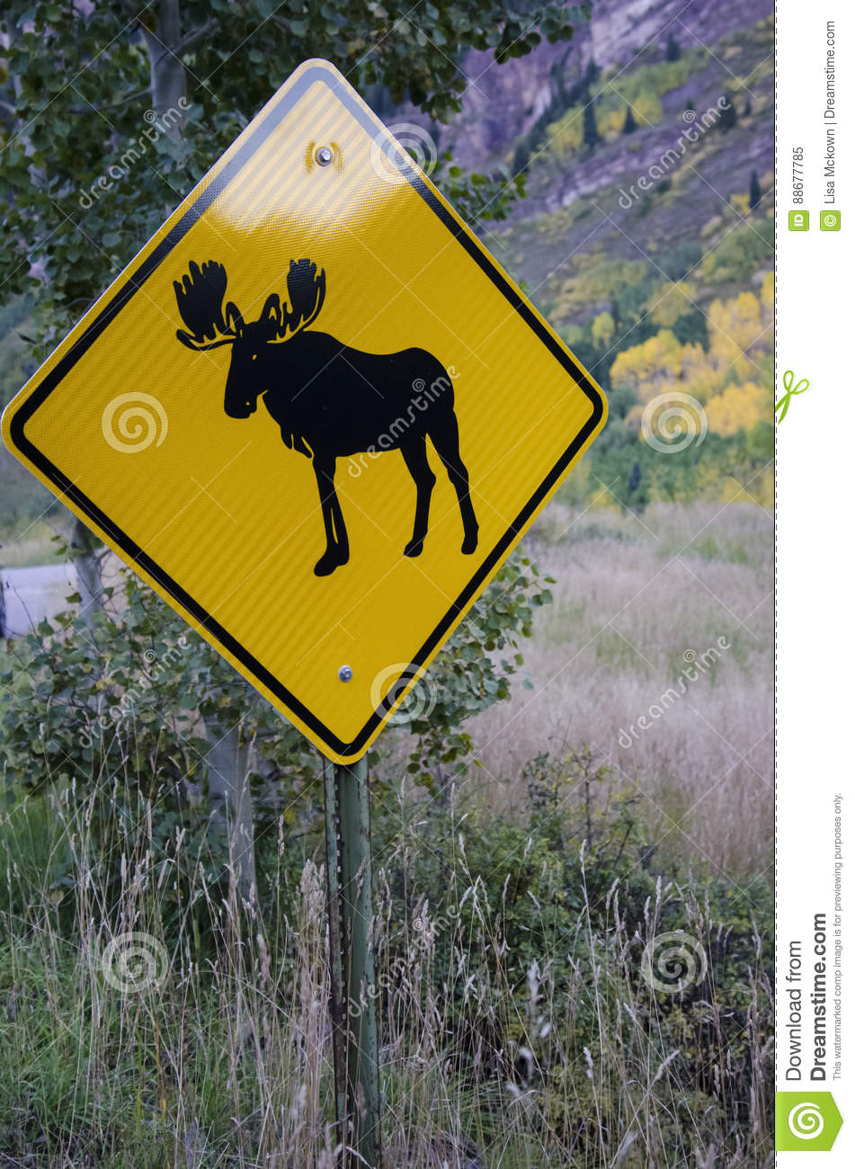 moose crossing sign stock image image of algonquin mammal 88677785