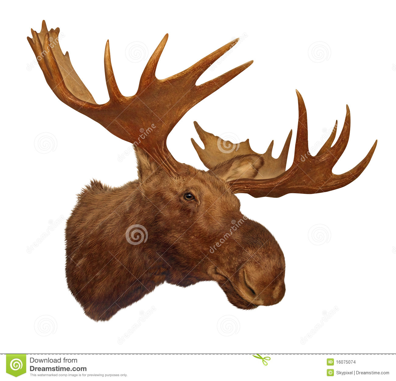 moose head antler stock illustration image of forest free moose clipart graphics moose head clipart free