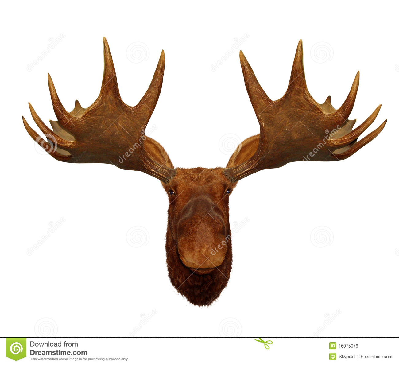 elk antlers graphic - photo #17
