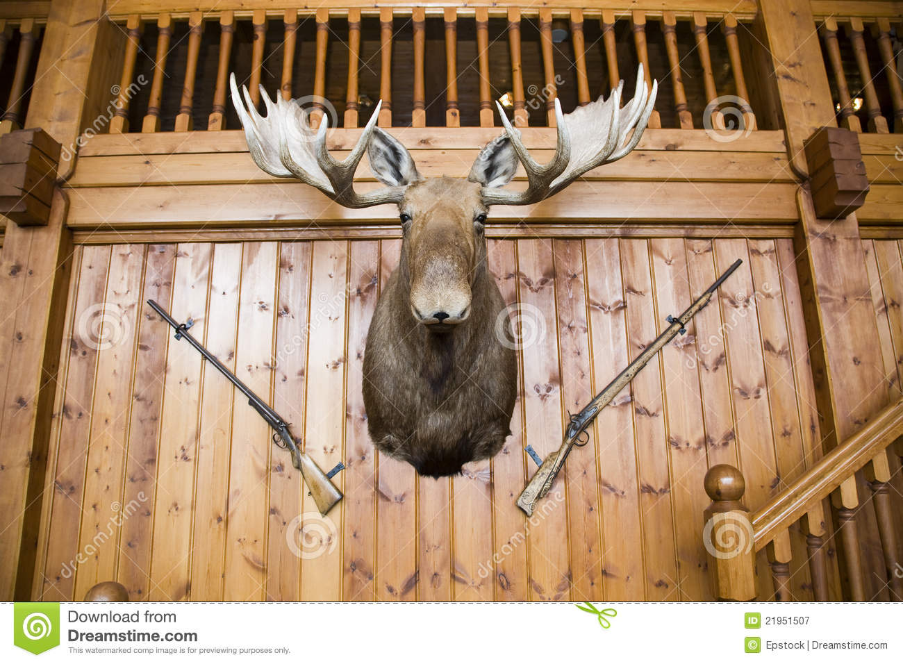 Moose Head And Guns On Wall Stock Image Image 21951507