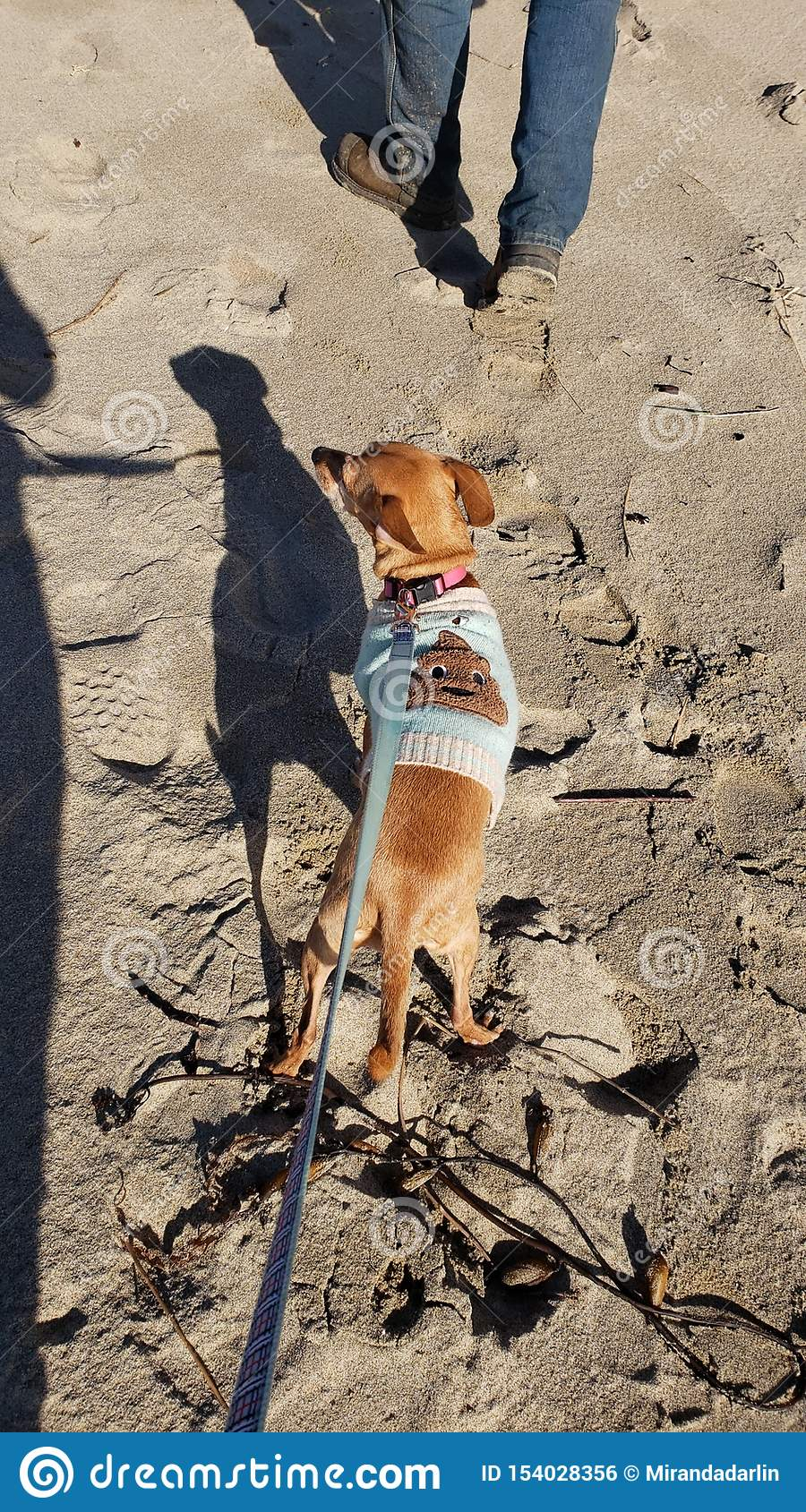 Moose in a Turd sweater on the beach