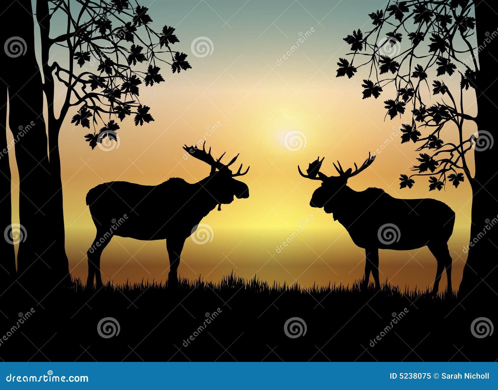 Moose wschód słońca