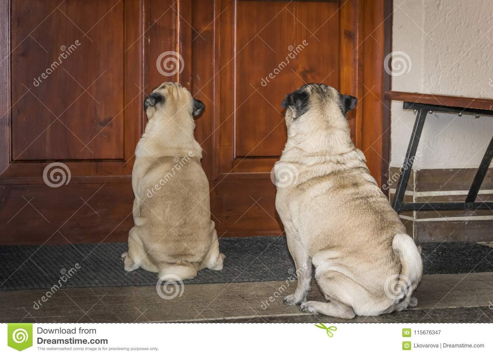 Mops på en farstubro framme av dörren