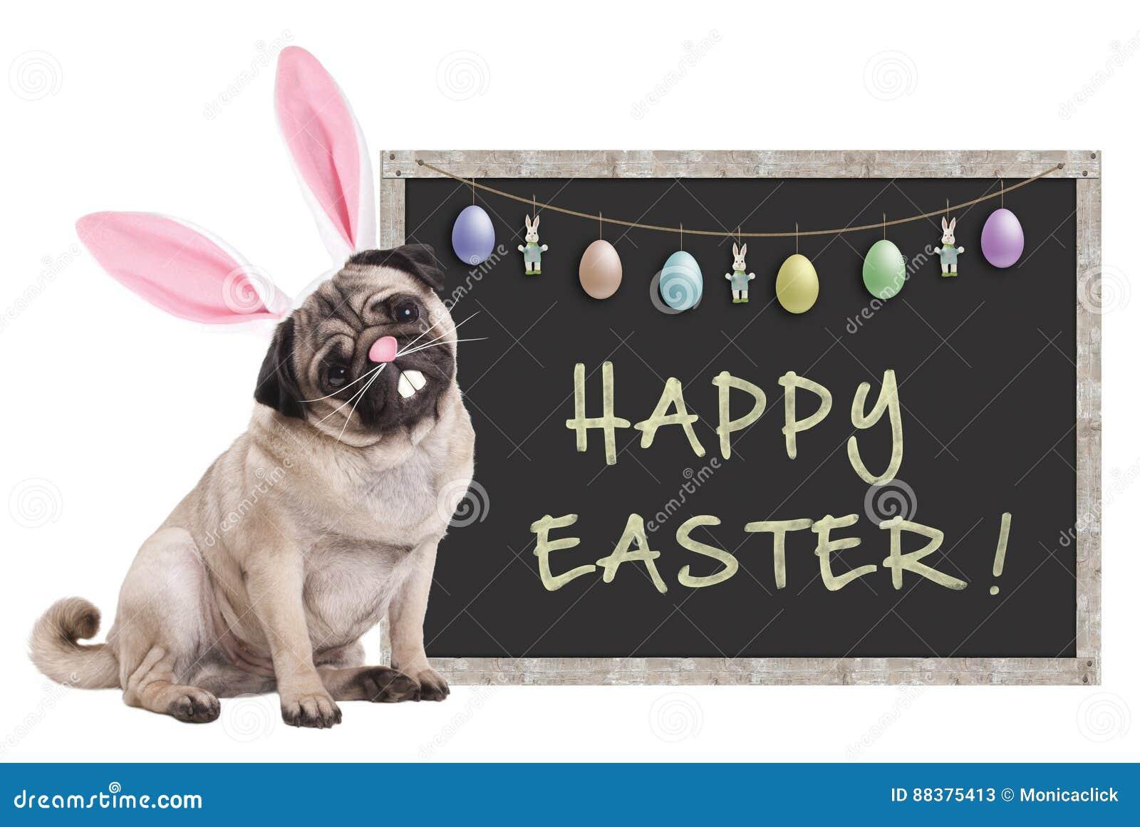 Mopsvalphunden med kaninen gå i ax diademsammanträde bredvid svart tavlatecken med text lyckliga easter och garnering, på vit bak