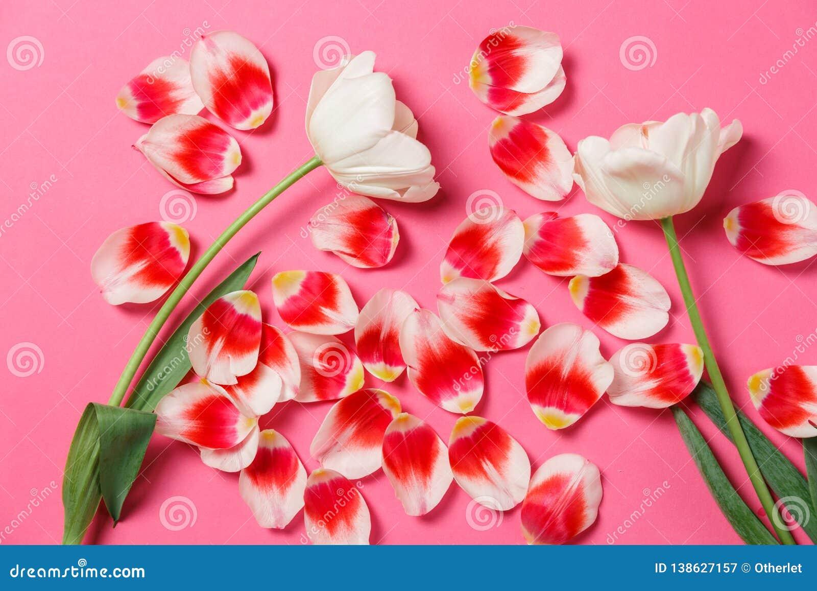 Moquerie élégante féminine avec la fleur de tulipe, pétales L espace de copie pour votre conception, pour des mariages, invitatio