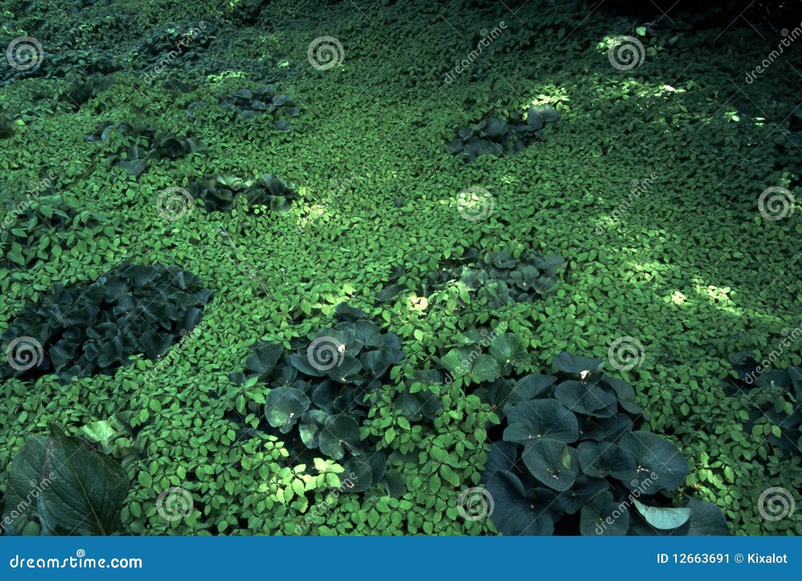 Moquette verde delle piante di galleggiamento dello stagno for Piante dello stagno