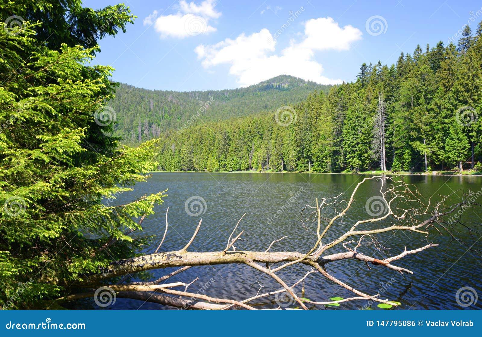 Moraine湖更总的Arbersee ??