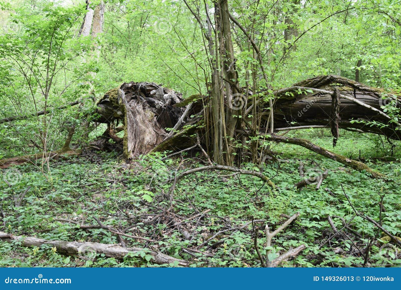 The Morasko meteorite nature reserve, europe