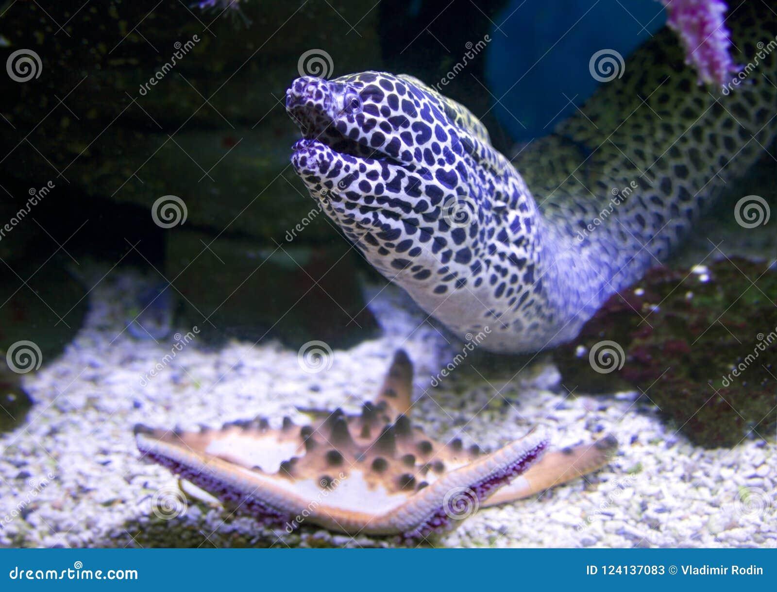 Snake Wire Mesh Fish Predator Tropical Coral Reefs Aggressive