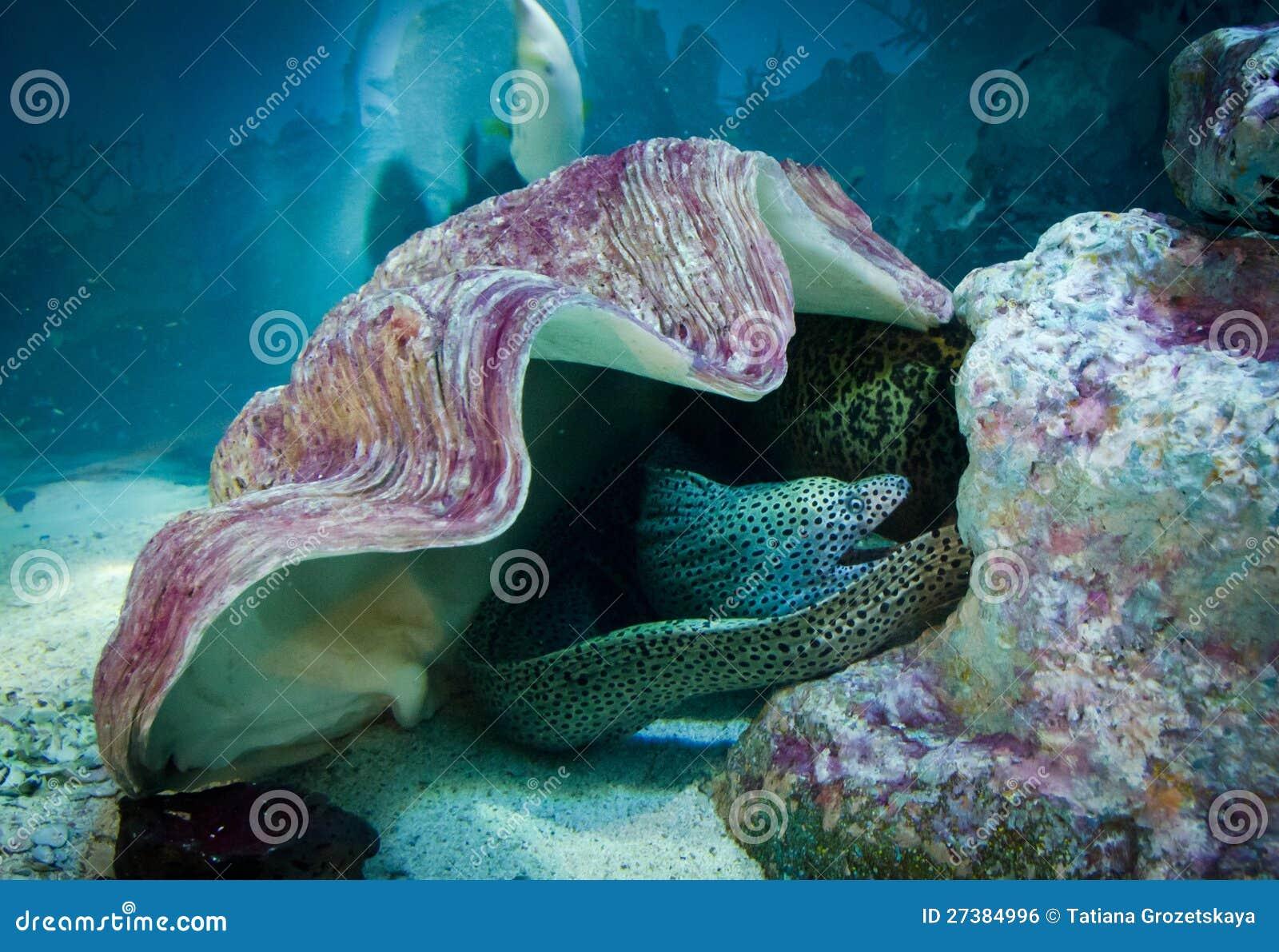 Underwater Fish Scene