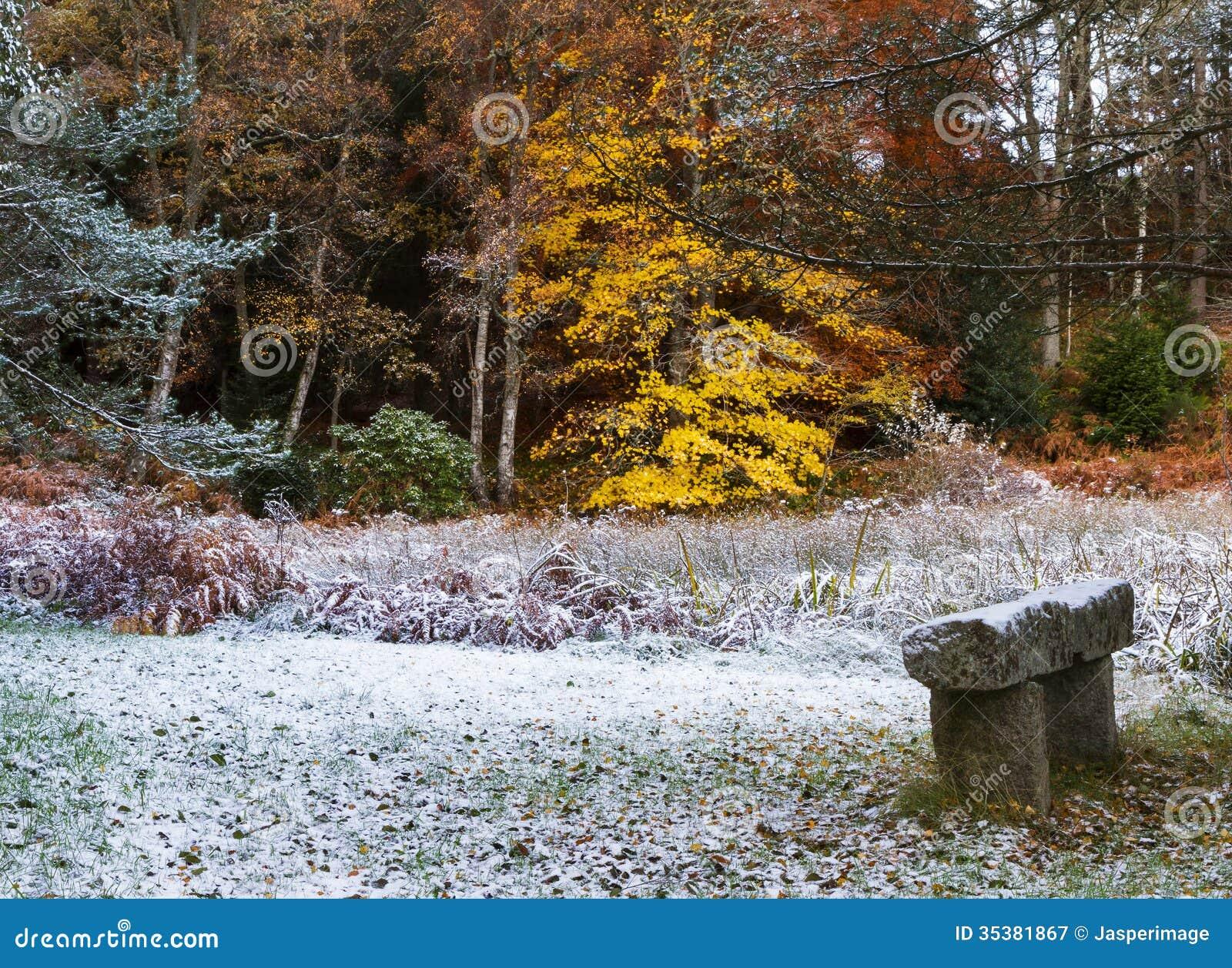Teste rank C - Anne' Moray-winter-garden-first-snow-november-speyside-scotland-united-kingdom-35381867