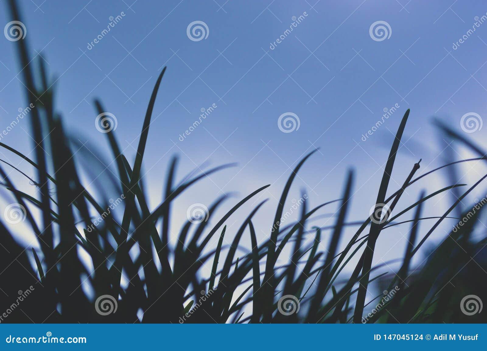 Morbidezza di erba incombente su