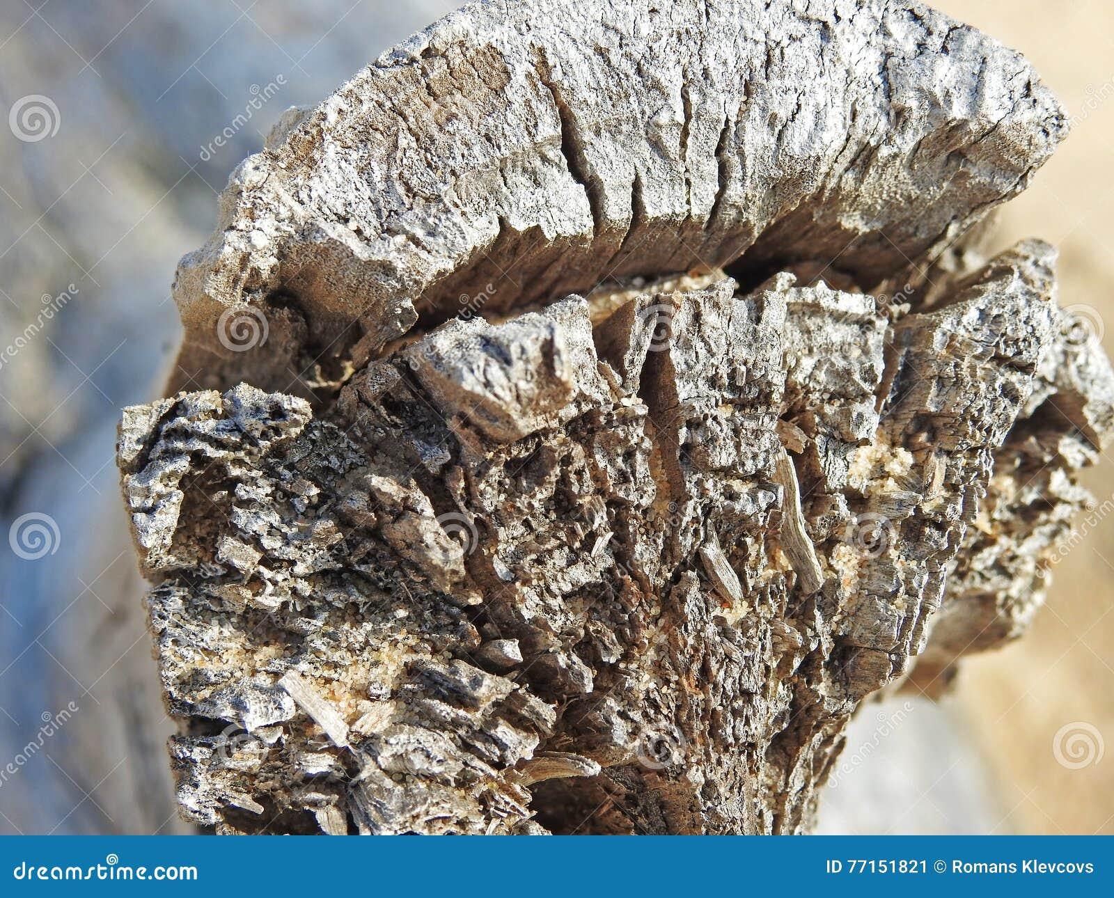 Morceau d un vieil arbre sur la plage
