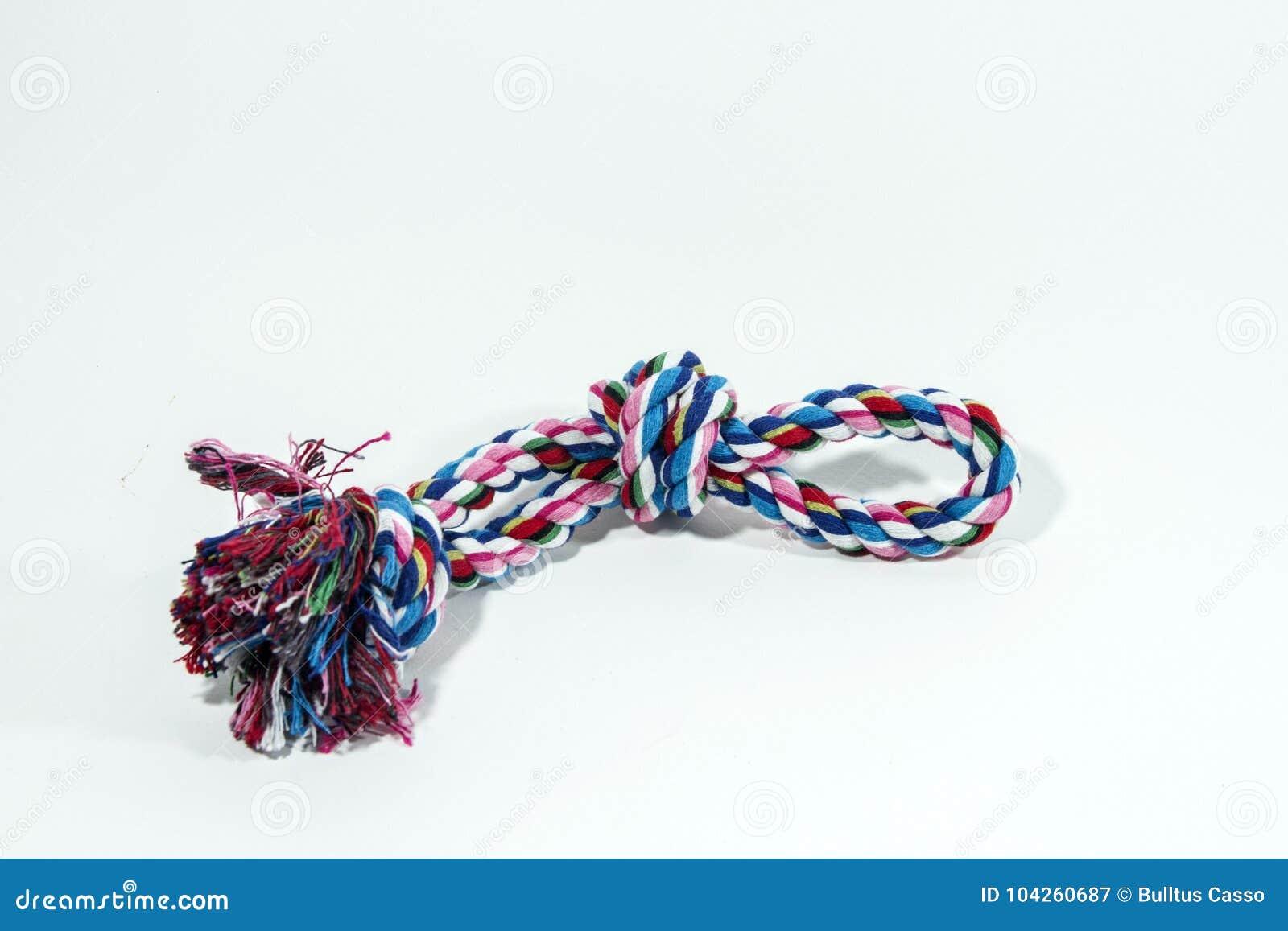 Mordida da corda para o animal de estimação no isolado