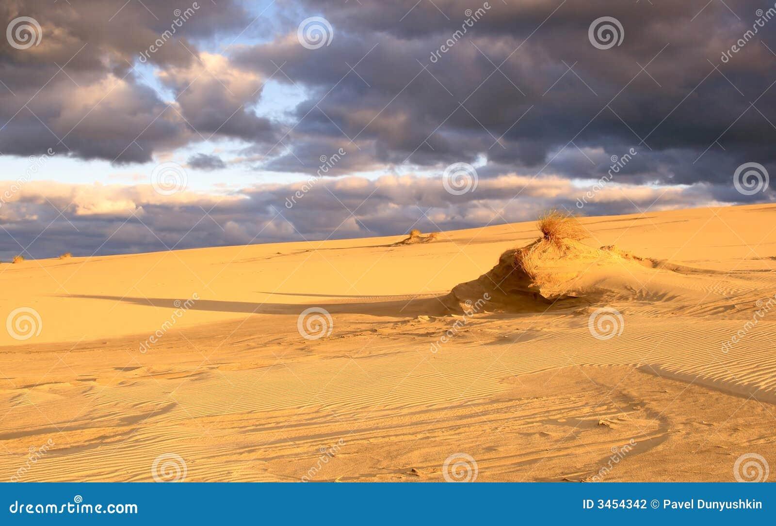 Morgen in den Dünen