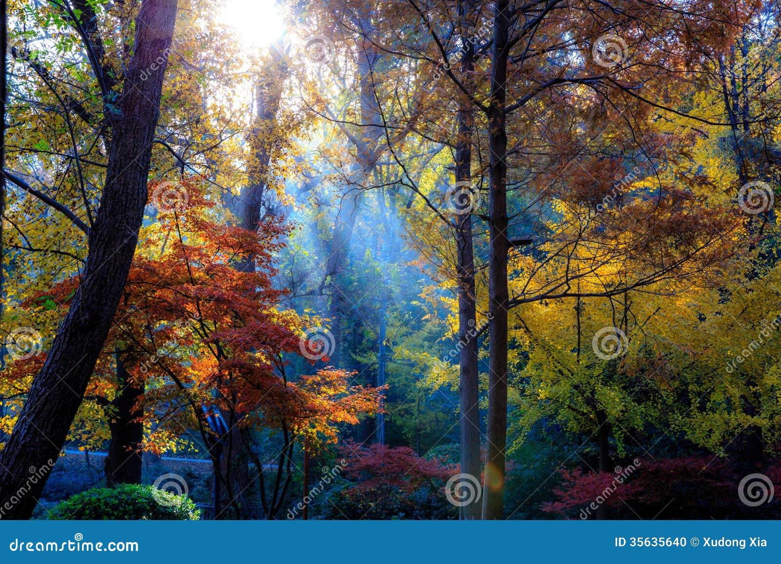 Morgen im Herbst