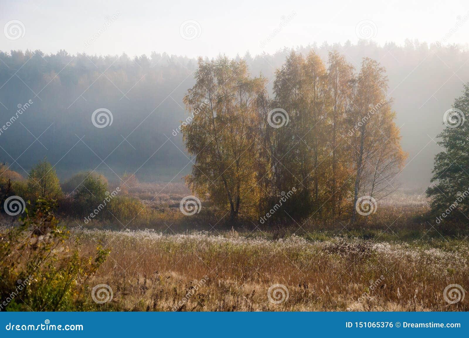 Morgennebel im September landschaft Feld und Wald