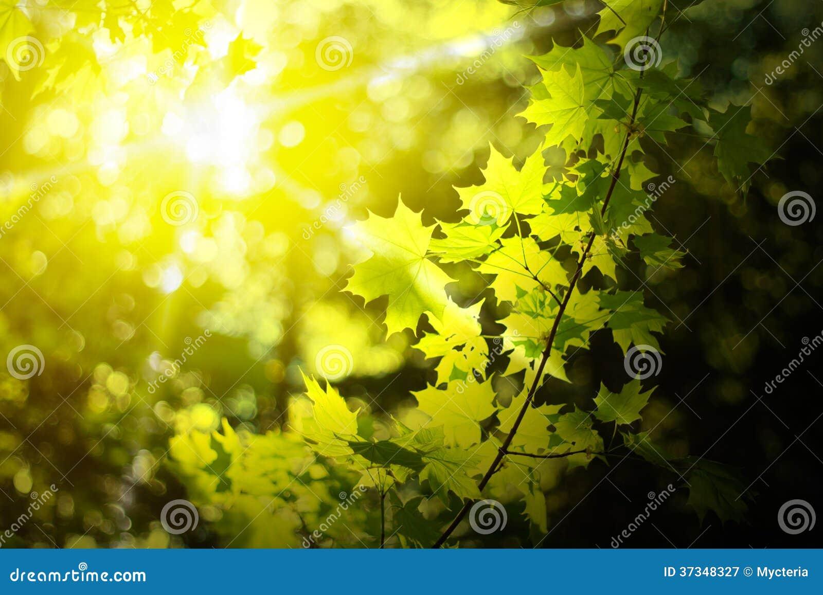 Morgon i en skog