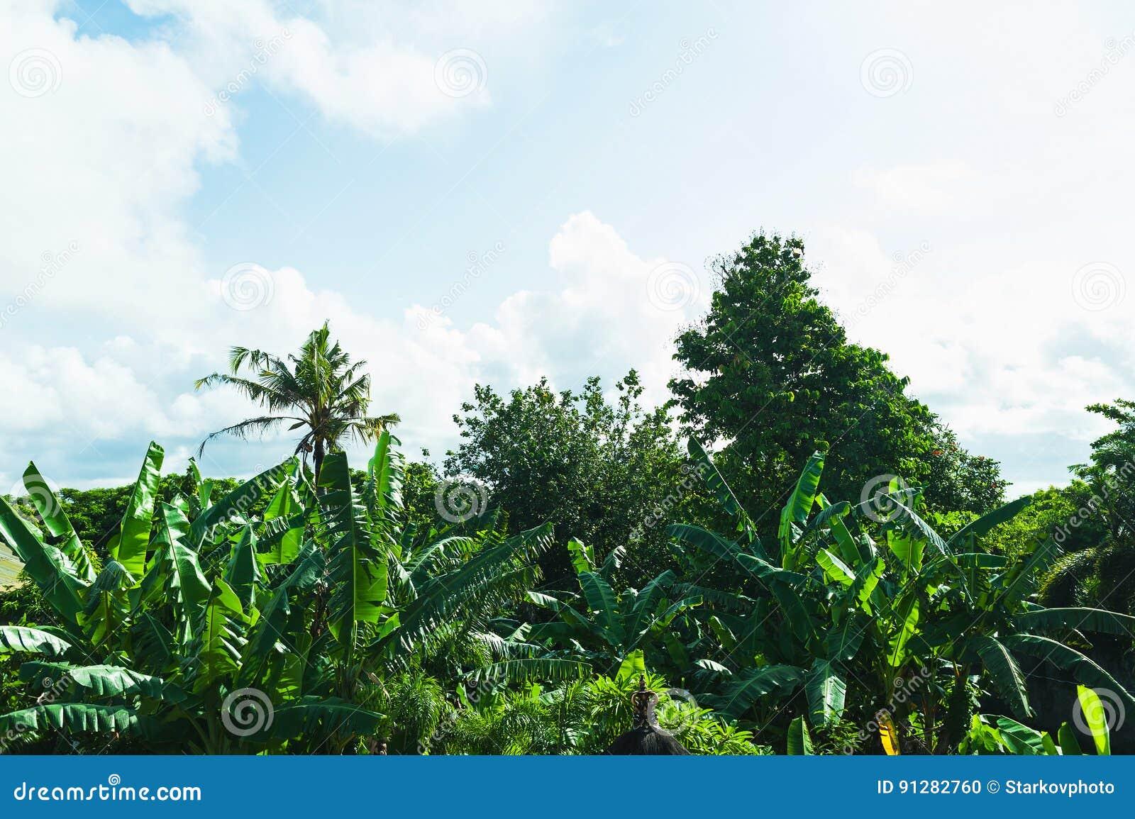 Morgon på en tropisk ö Nya tropiska gräsplaner, gömma i handflatan och blå himmel med moln